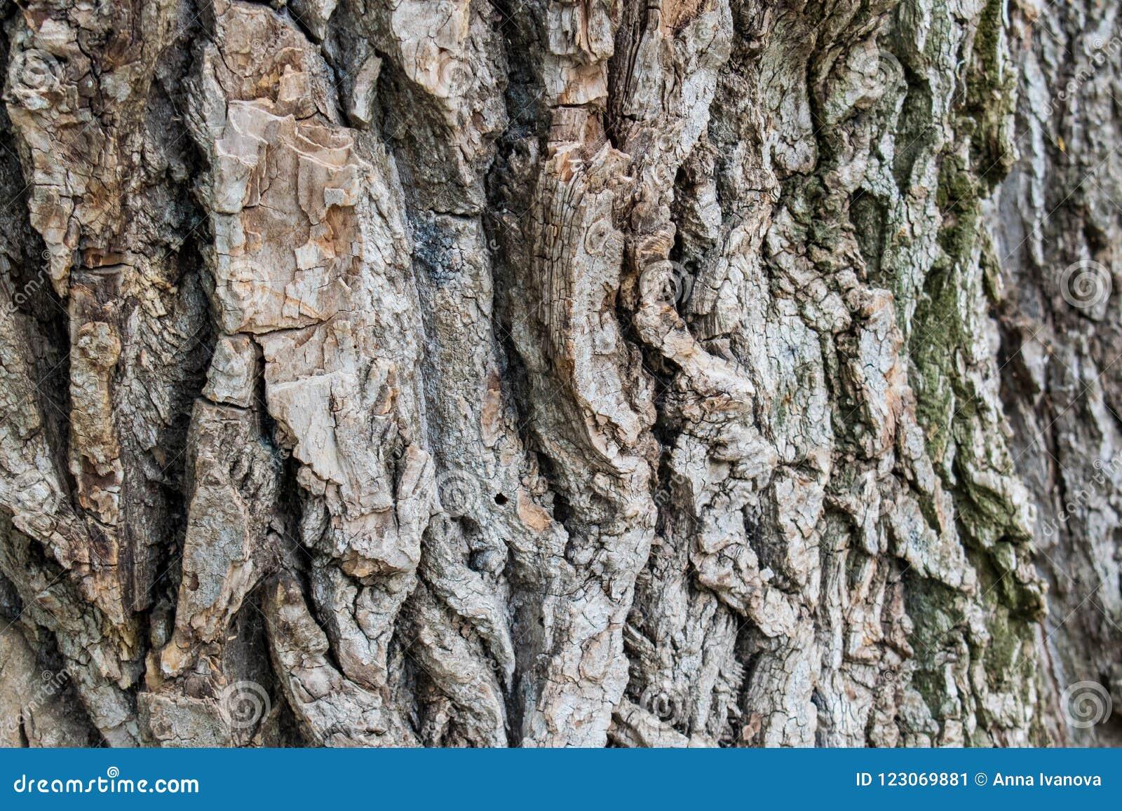 Naturlig bakgrund, bruna texturerade vid liv och för växa, naturliga och naturliga kurvor för skäll, och modeller