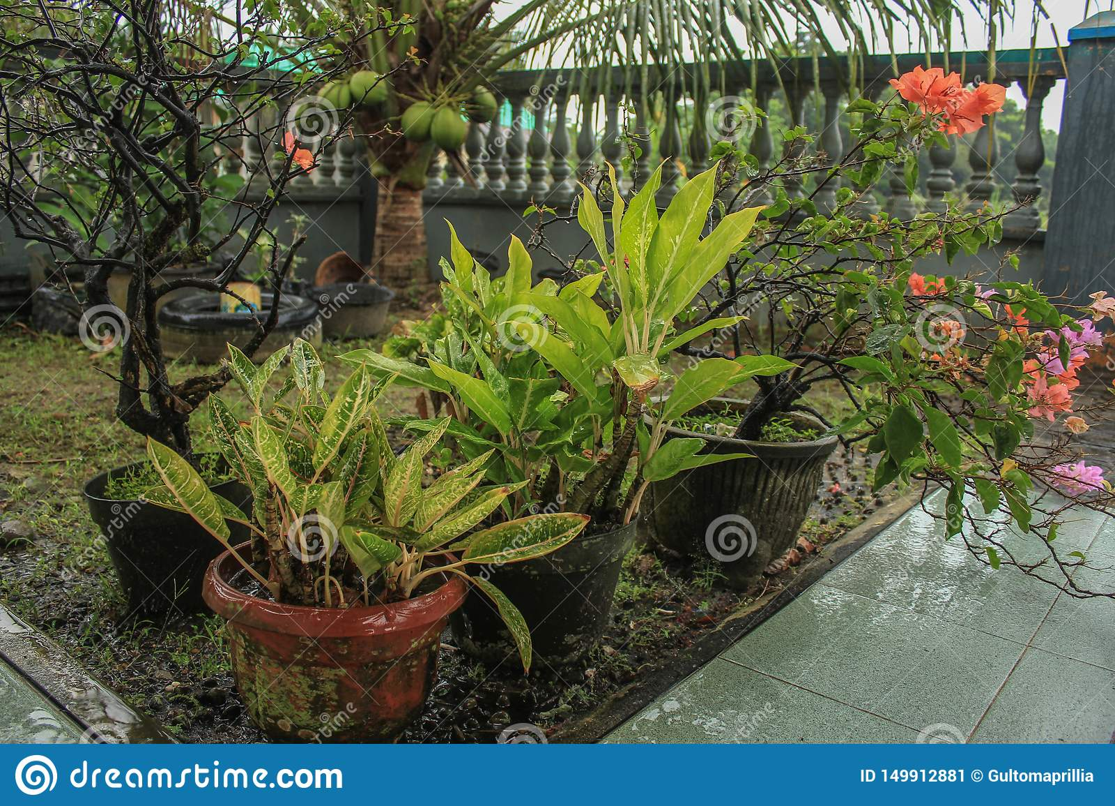 Naturligt arbeta i trädgården med blomman på krukorna efter regn