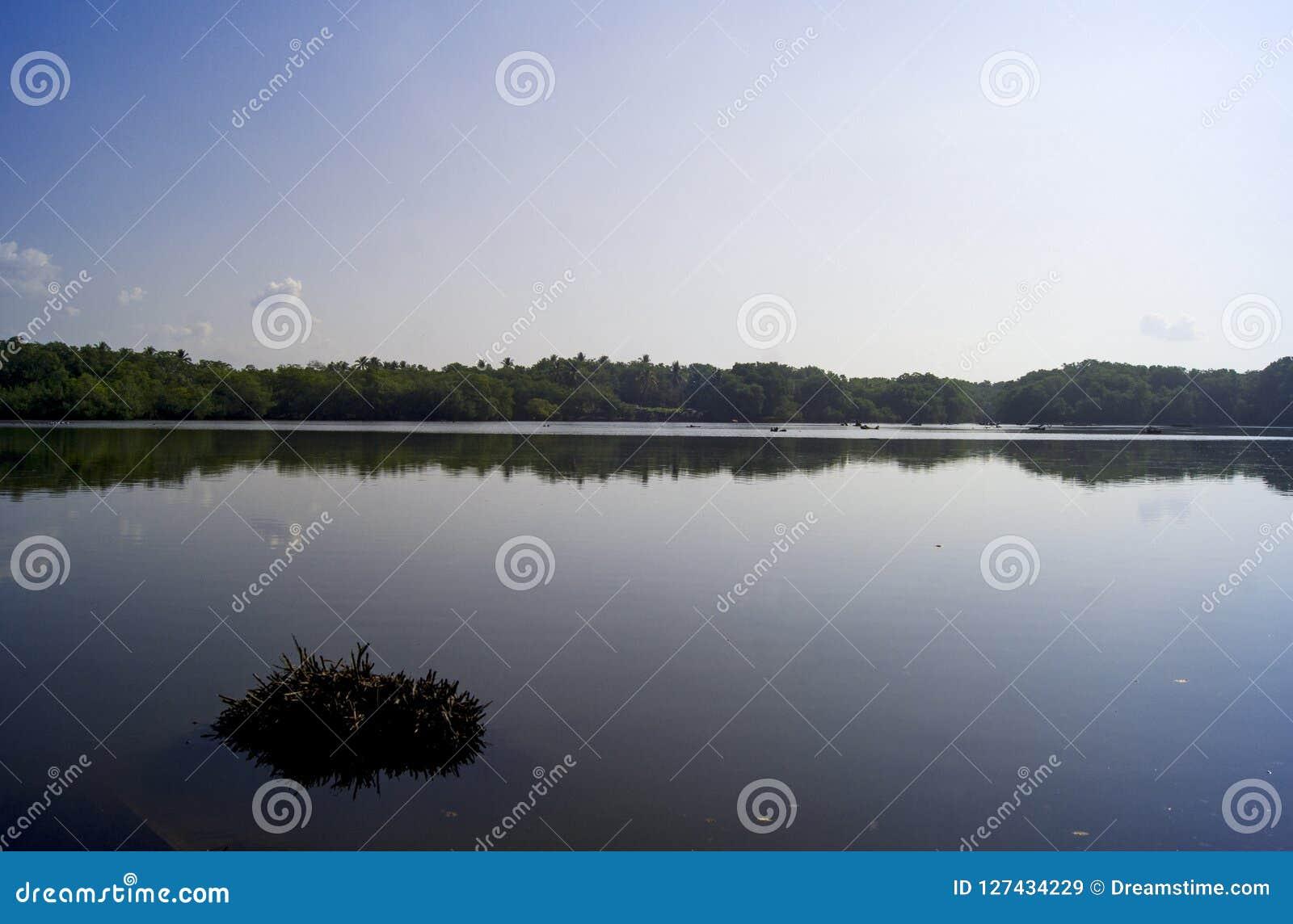 Naturligt ekosystem i kust- zon
