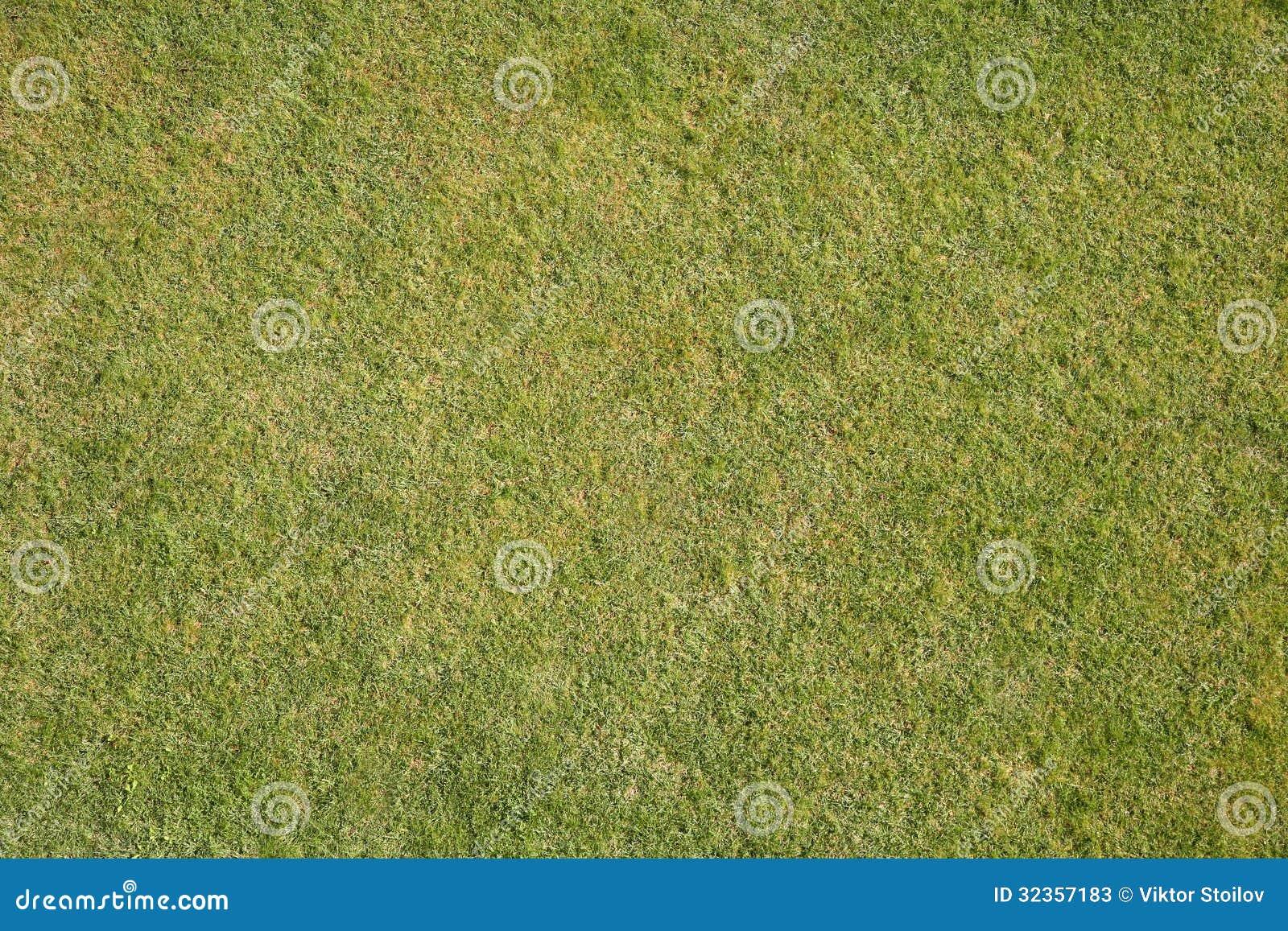 Naturligt gräs
