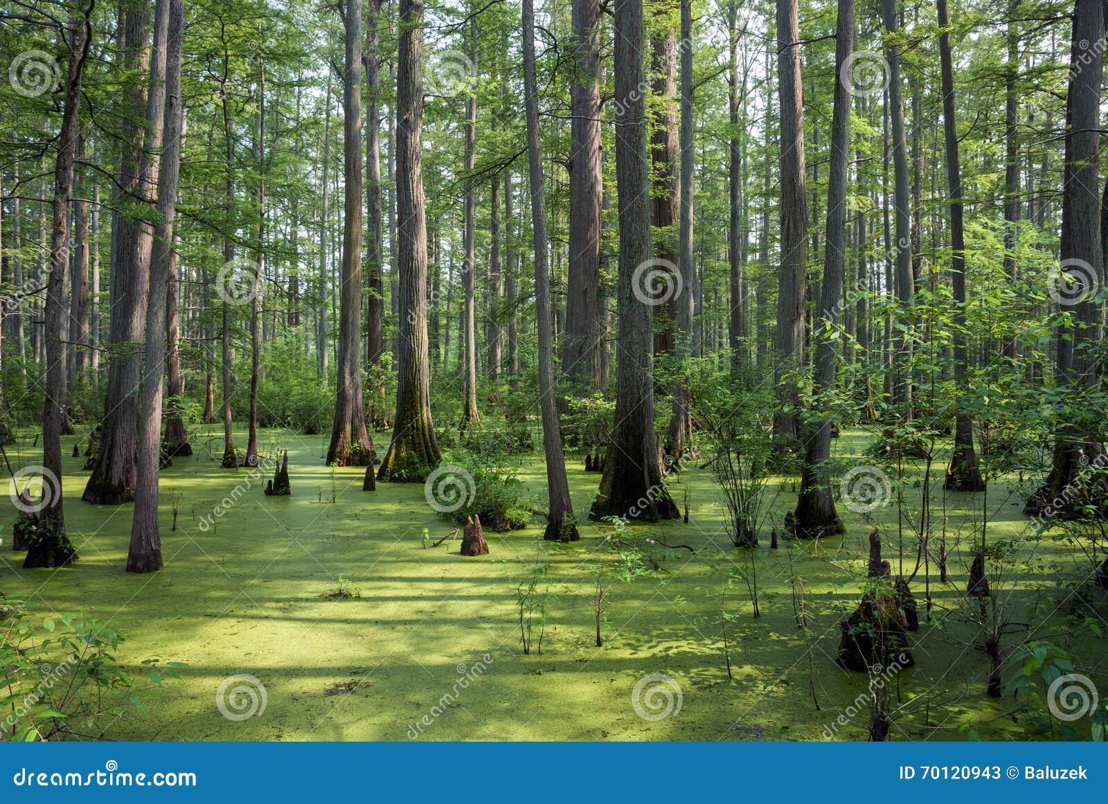 Naturligt område för gömställeflodstat, Illinois, USA