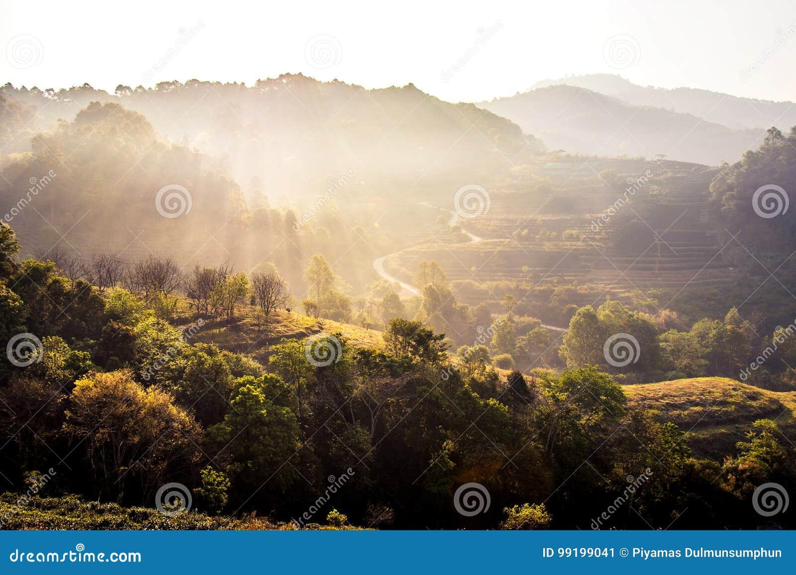 Naturreisekonzept: Nebelhafter Sommer für Schicht des Baumberges