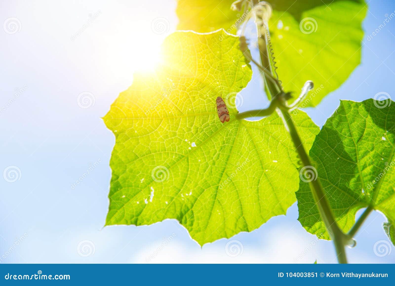 Natury ekologia i nauka Zbliżenie liścia zielona tekstura z chlorofilem i procesem fotosynteza