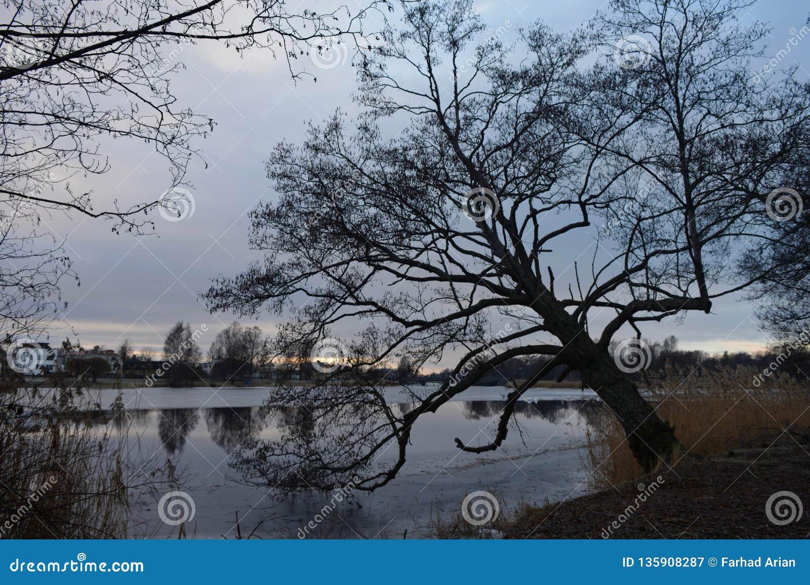 Natury fotografia w Szwecja