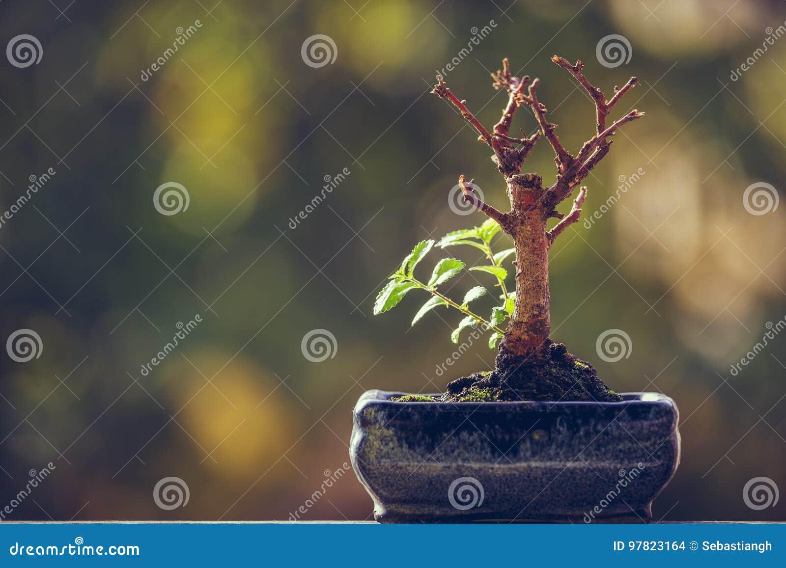 Natury odrodzeniowa władza