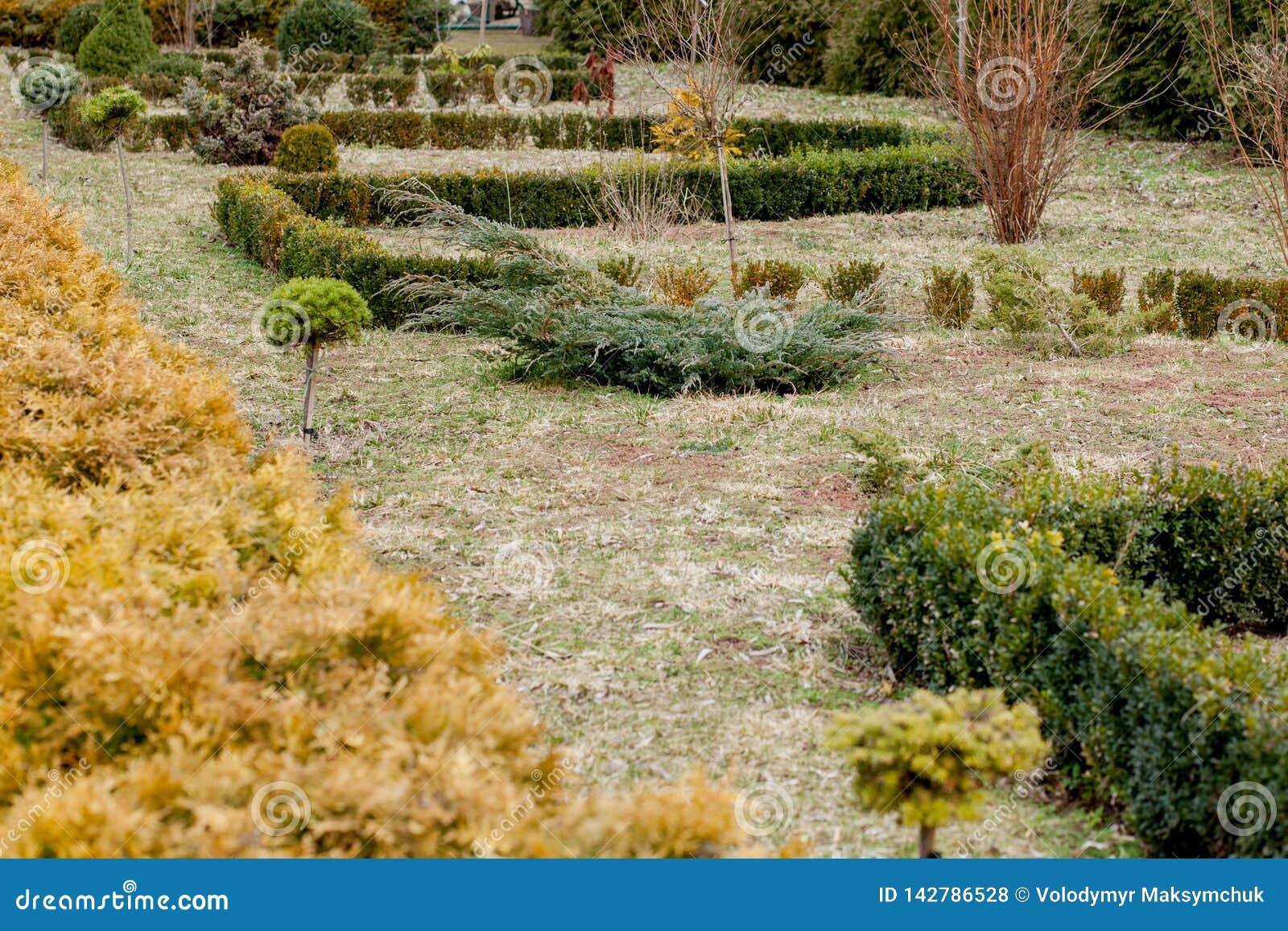 Natuurlijk het modelleren panorama in huistuin Mooie mening van gemodelleerde tuin in binnenplaats Landschap van het modelleren g
