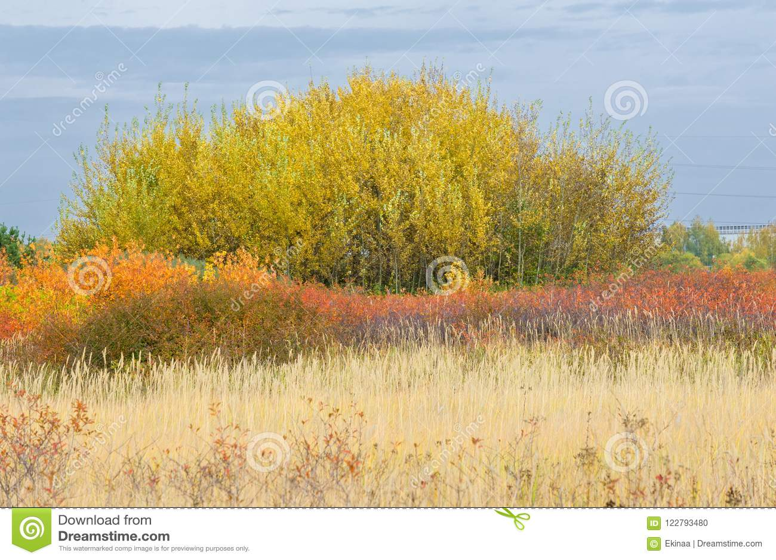Natuurlijke landschappen Autumn Landscape Voorsteden van de stad, brigh