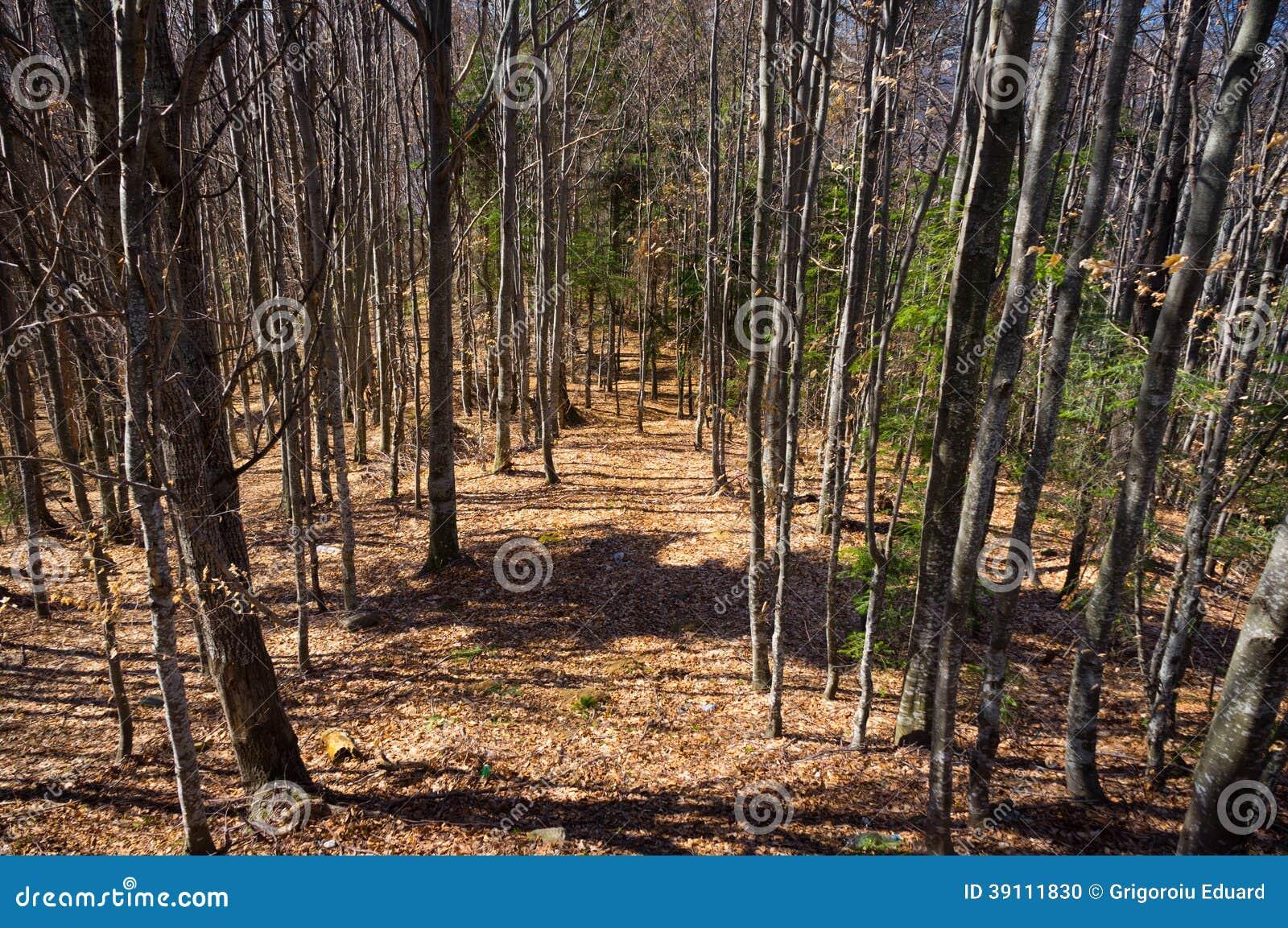 Natuurlijke weg in het hout
