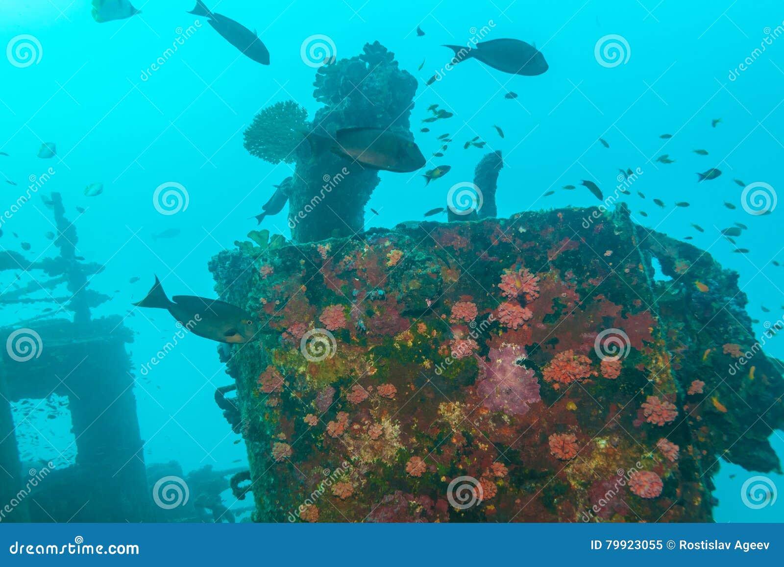 Naufragio en el azul de océano, Maldivas