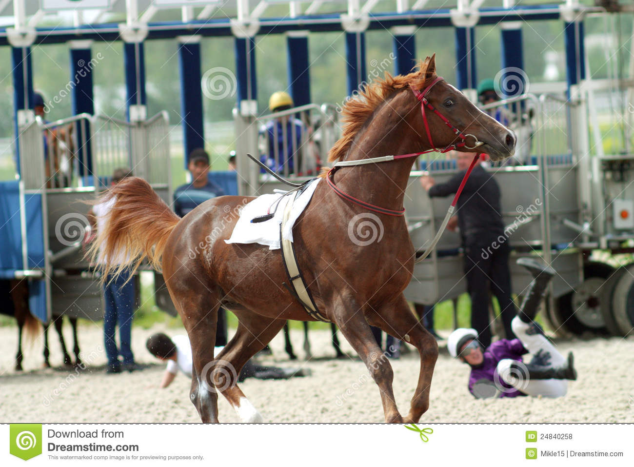 racing form profiles horse naughty