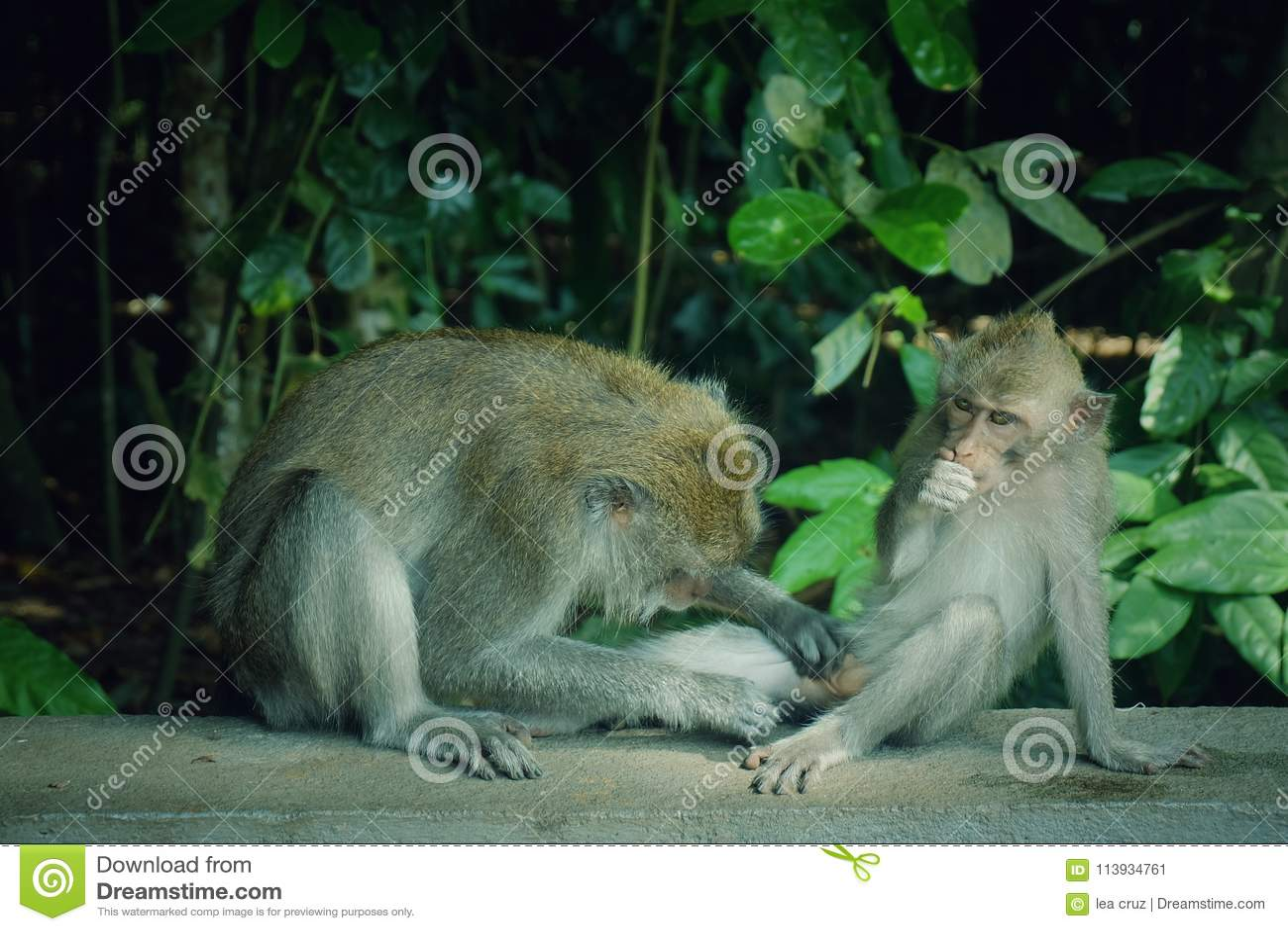 Naughty monkeys 30