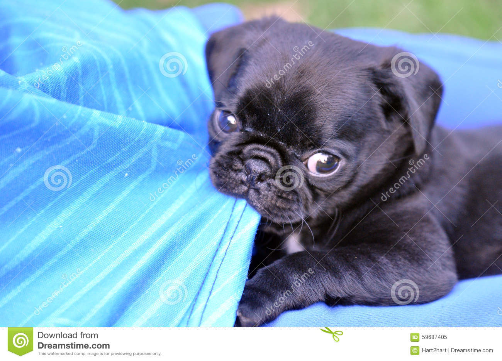 Naughty Puppy Stock Image Image Of Biting Chew Innocent 59687405