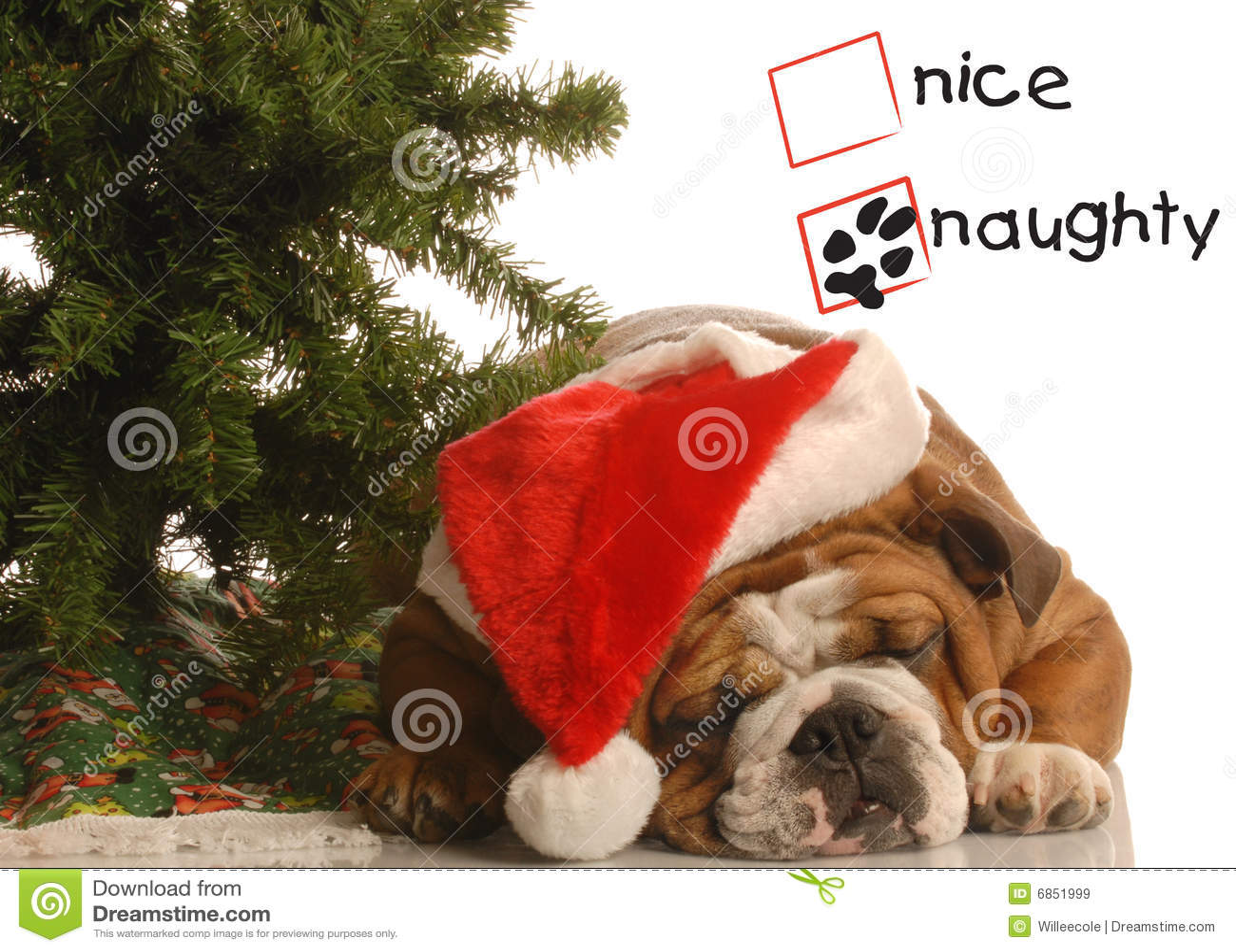 Naughty puppy at christmas