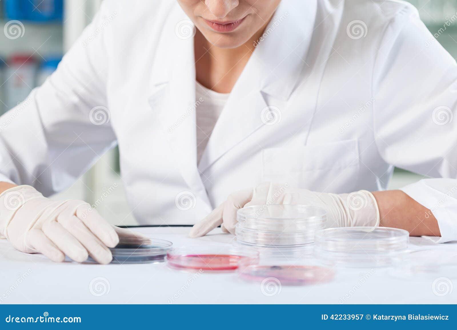 Naukowiec sprawdza Petri naczynia