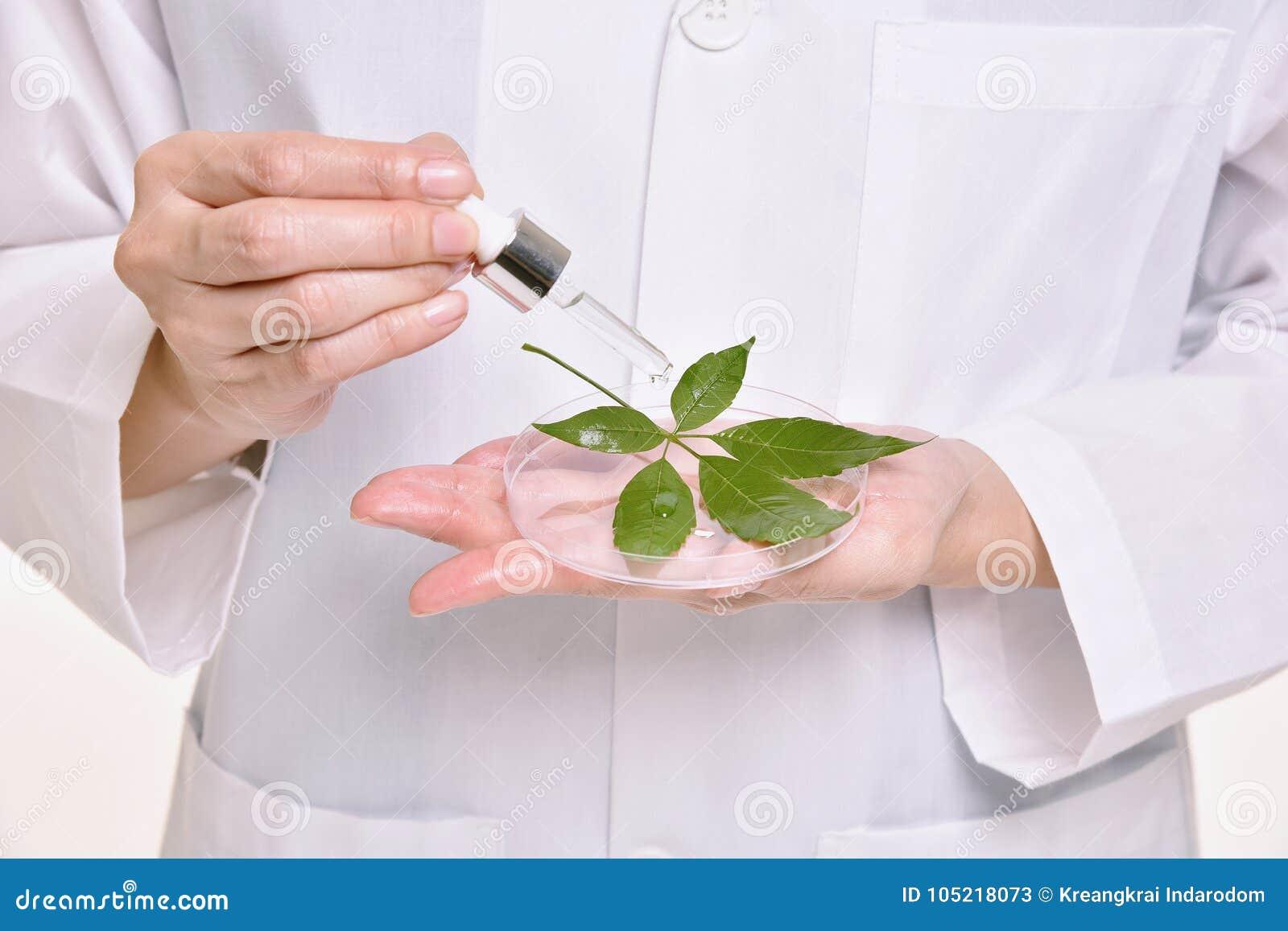 Naukowiec z naturalną nafcianą skóry opieką, Zielony ziołowy organicznie
