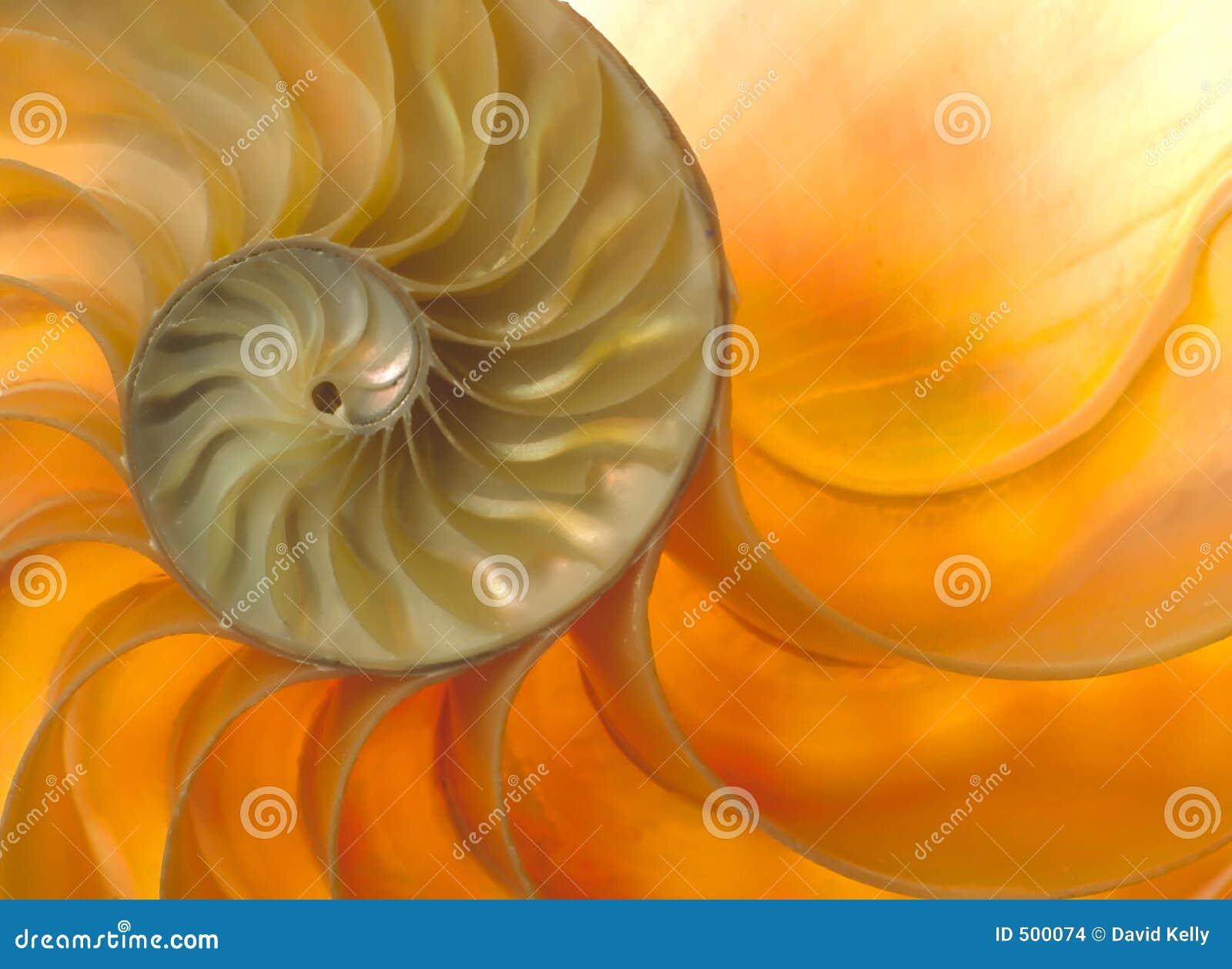 Nautilaus shell