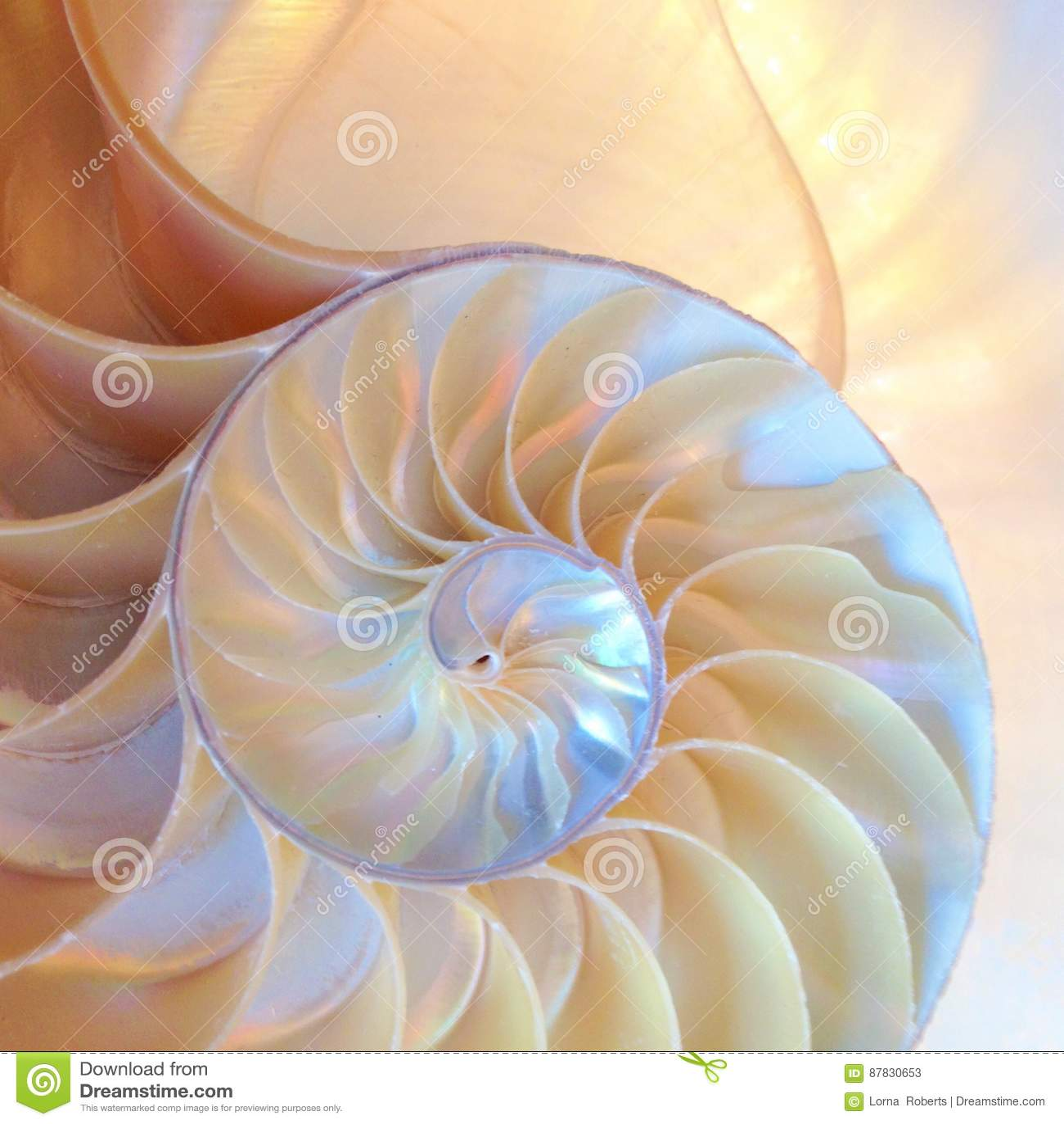 Nautilus κοχυλιών συμμετρίας σπειροειδής χρυσή αναλογία στενή επάνω πίσω αναμμένη μητέρα διατομής του Φιμπονάτσι μισή αύξησης δομ