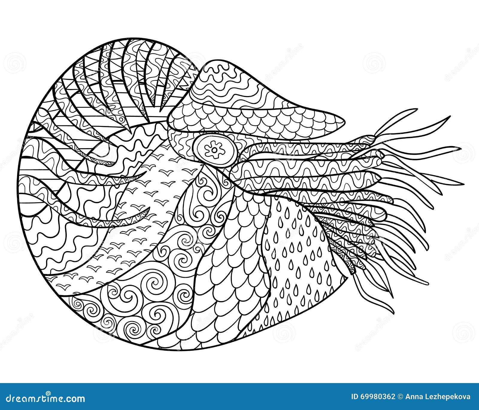 Line Art Nautilus : Nautilus with high details stock vector image