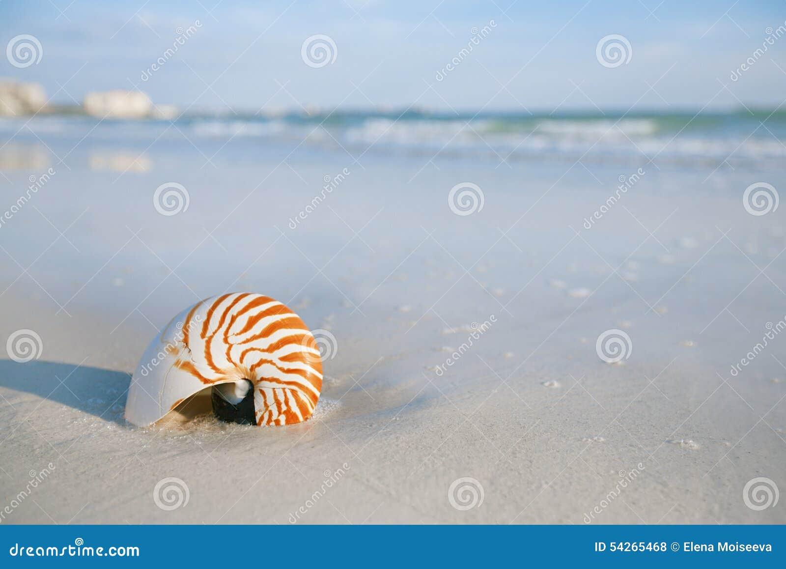 Nice Sea Shells On The Sandy Beach Stock Image ...