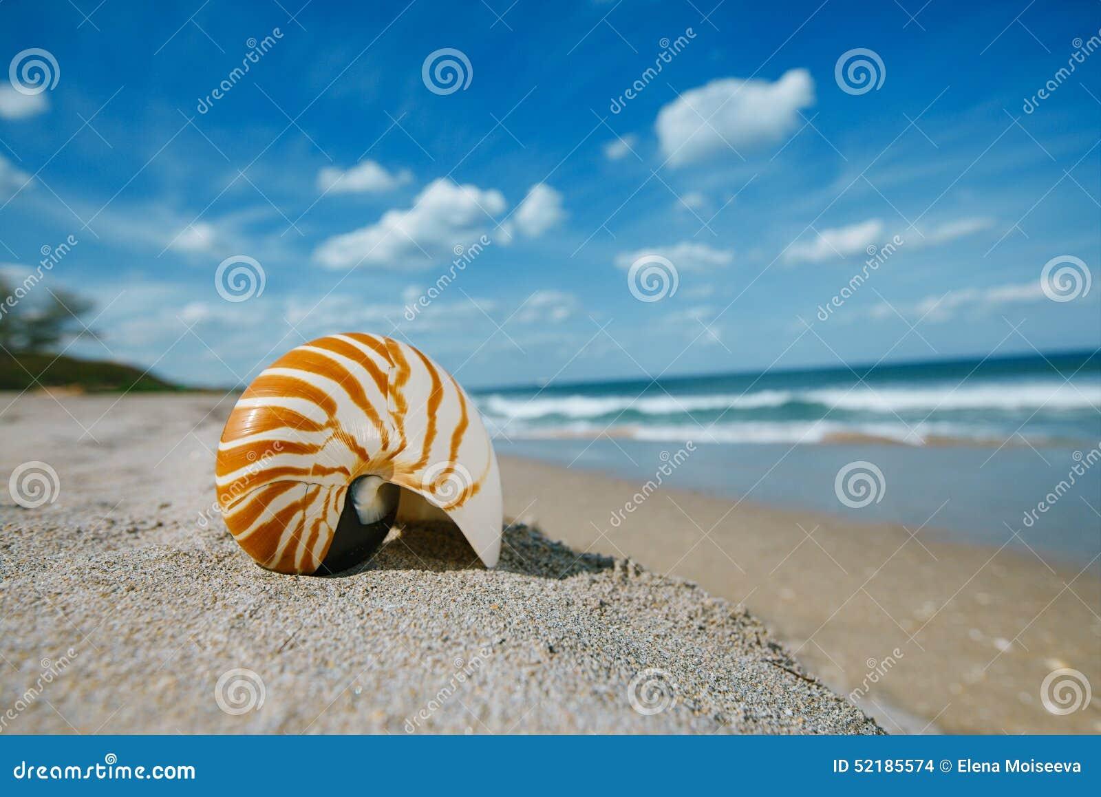 beach sun and white soft sand Buy beach sand products like roakohu beach shade in sand sun, sand & a tall drink in my hand beach towel in orange and soft white sand.