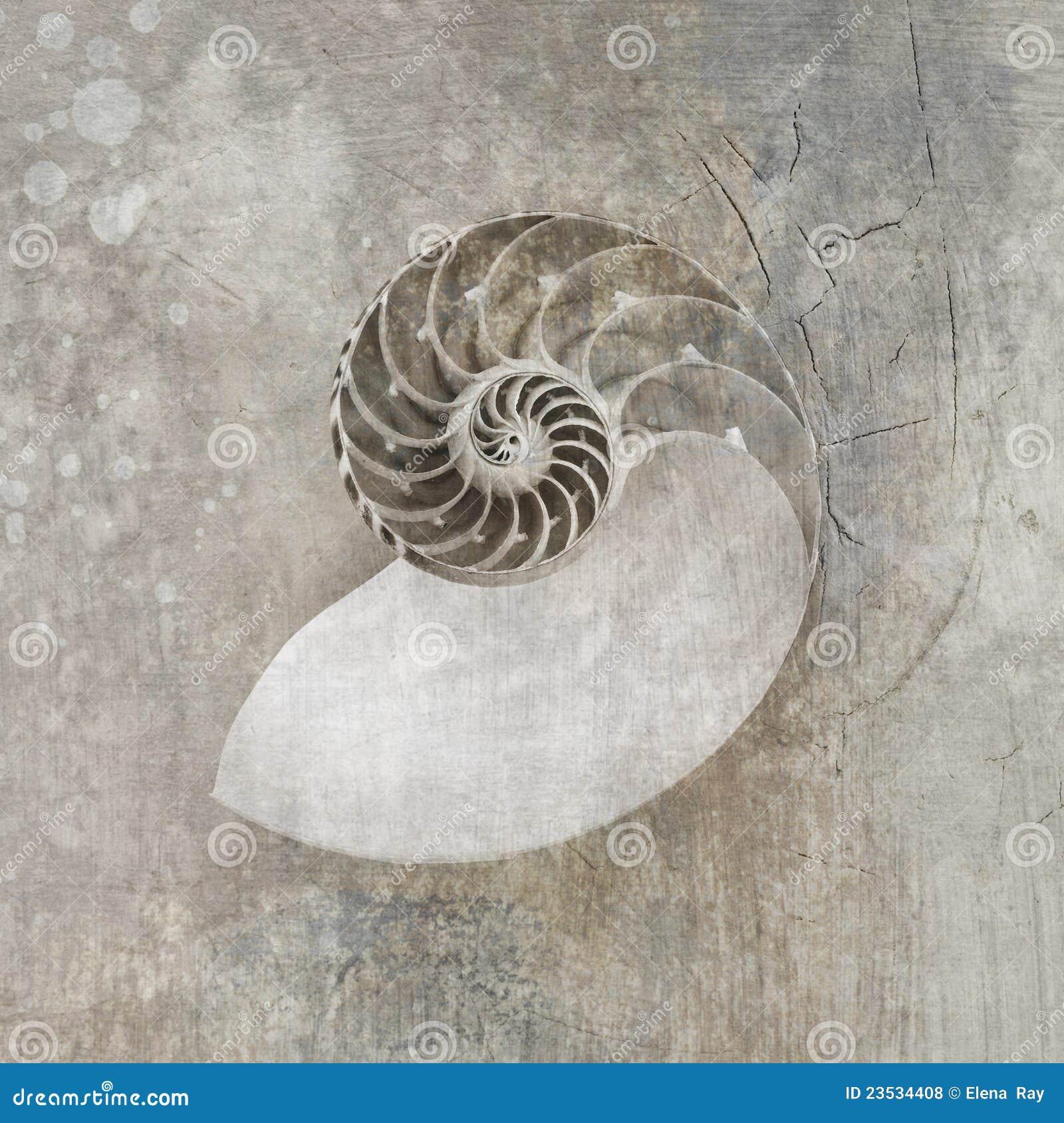 NautilusSeashell