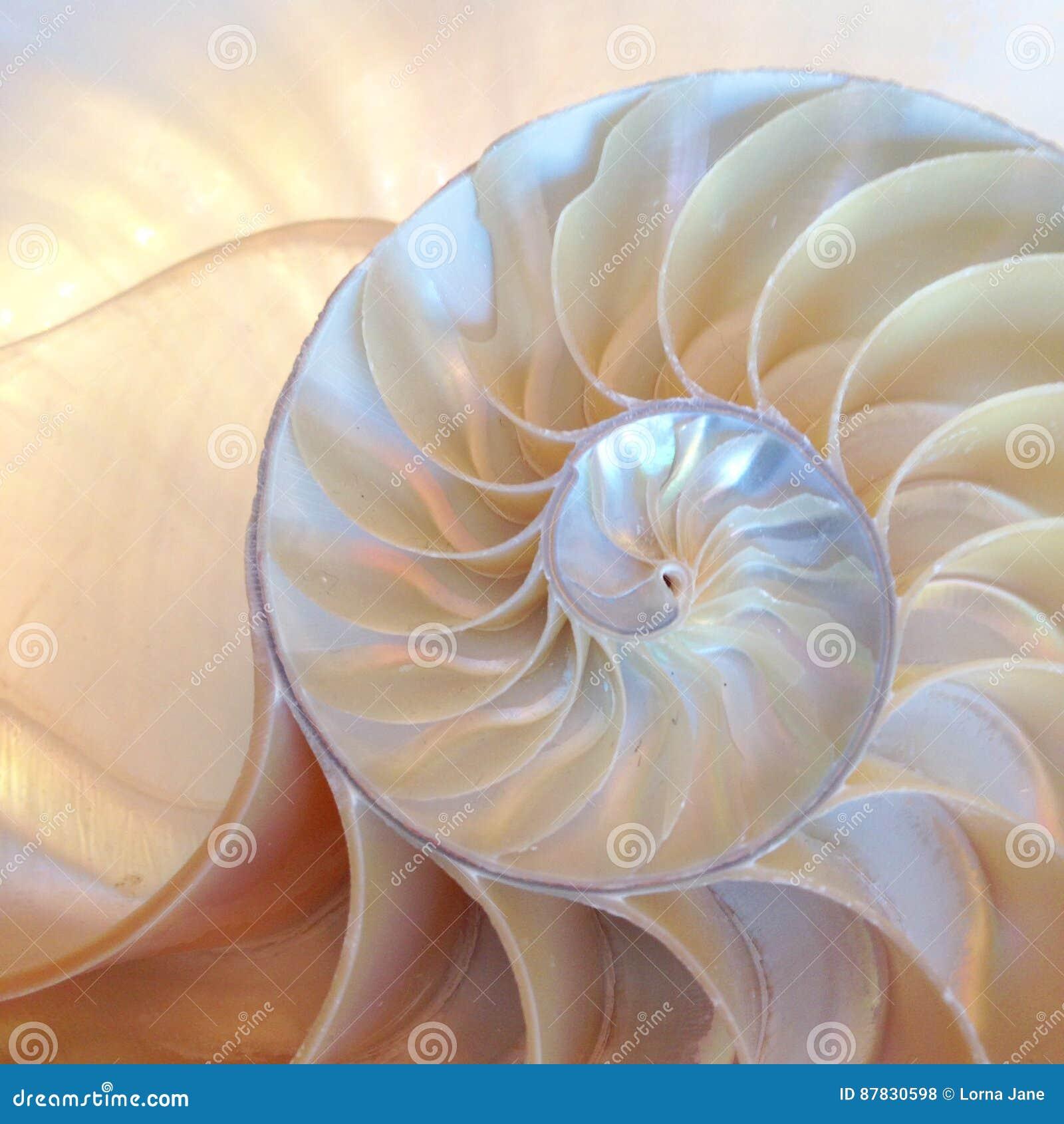 Nautilusshell halve de dwarsdoorsnede spiraalvormige gouden verhouding de dichte omhoog achter aangestoken moeder van symmetriefi