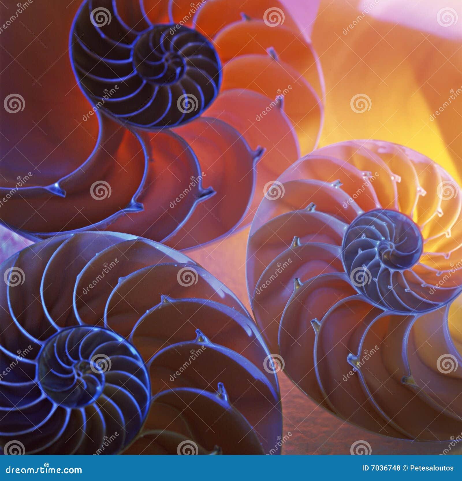 Nautilusshells