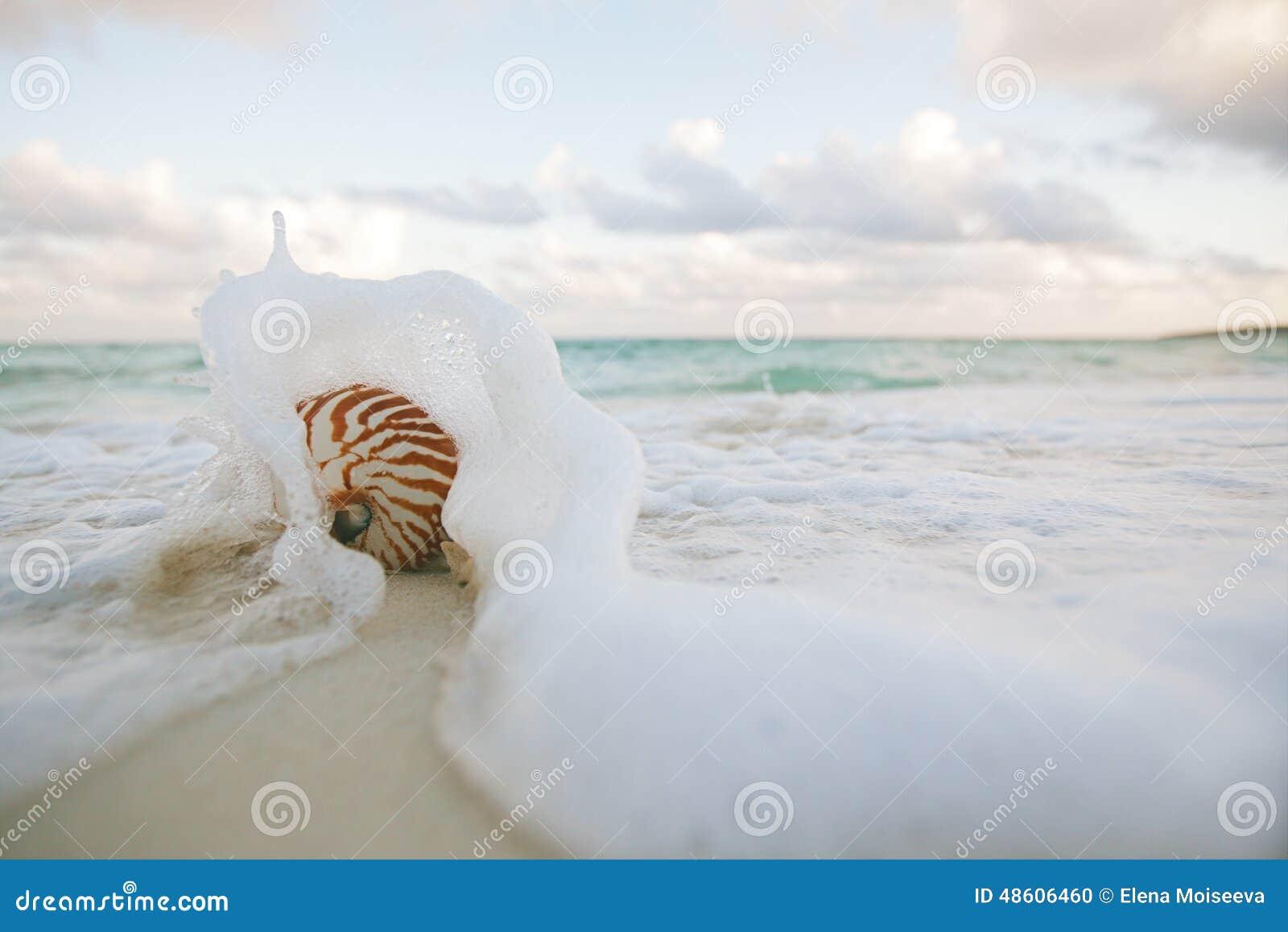 Nautilusskalet på det vit flyga iväg havet för stranden sand vinkar