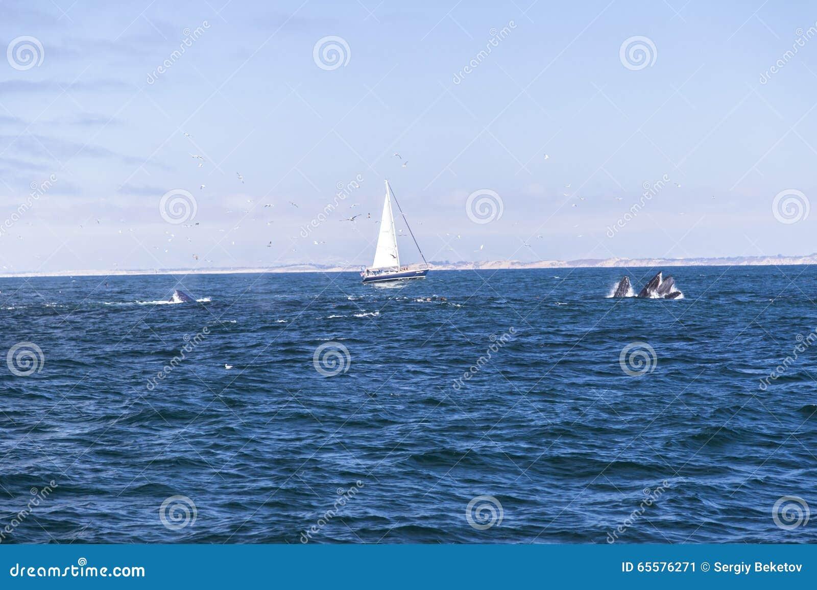 Navigação isolada do iate no Oceano Atlântico azul perto de Monterey, Califórnia