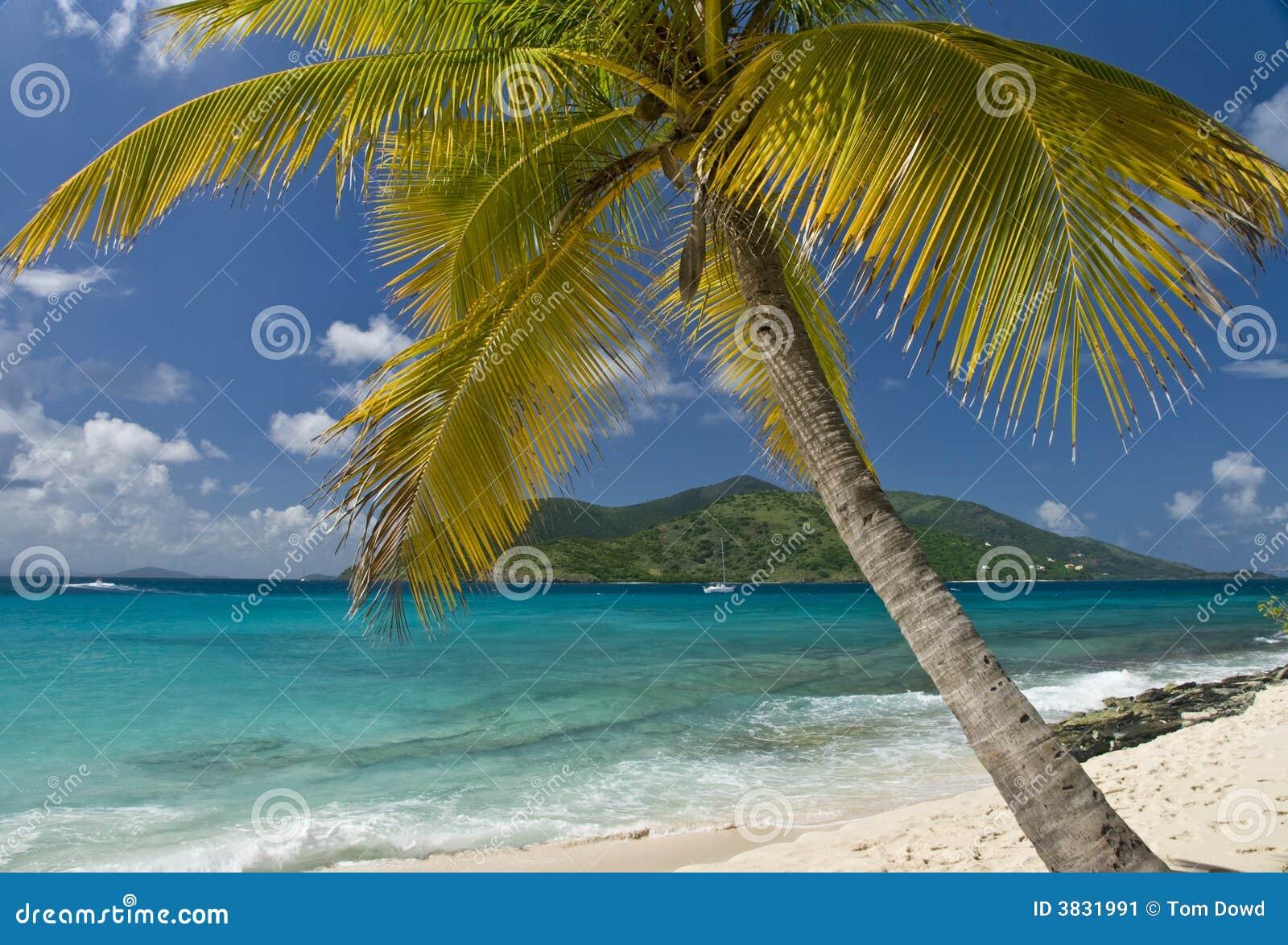 Navigation de palmier d île