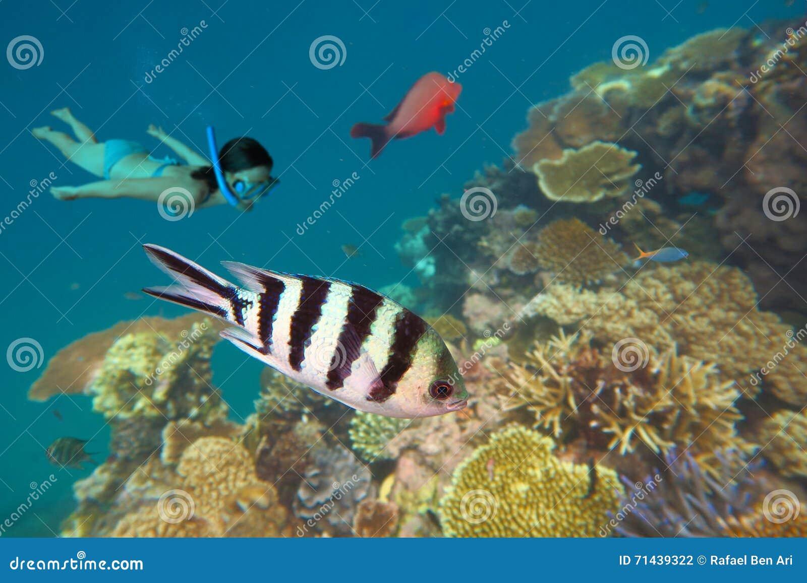Naviguer au schnorchel dans l Australie de la Grande barrière de corail Queensland