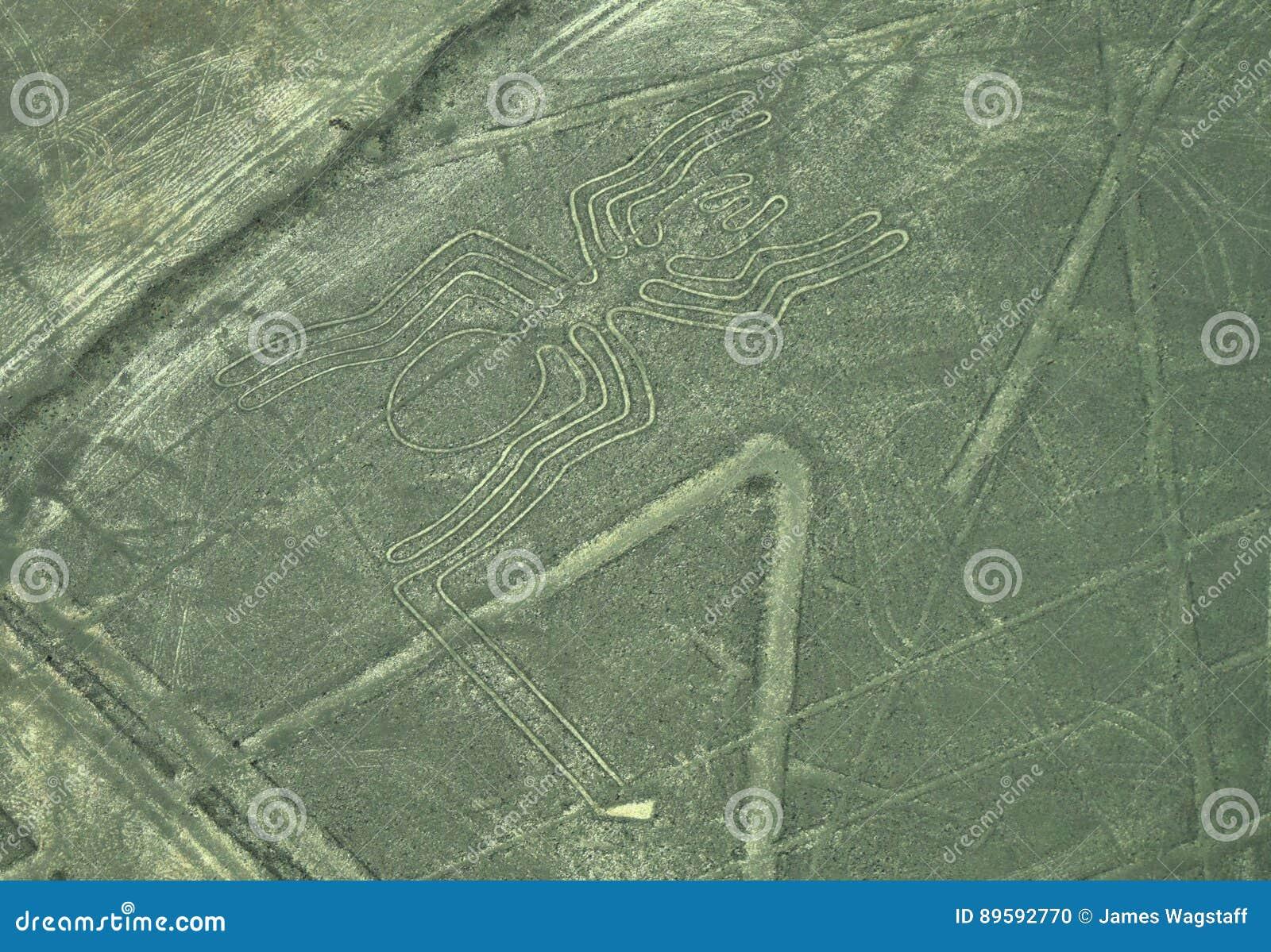 Nazca linie: Pająk