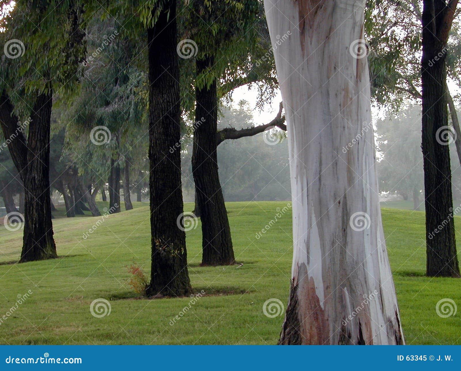 Download Ne Peut Pas Voir La Forêt Pour L'arbre Image stock - Image du nature, gorge: 63345