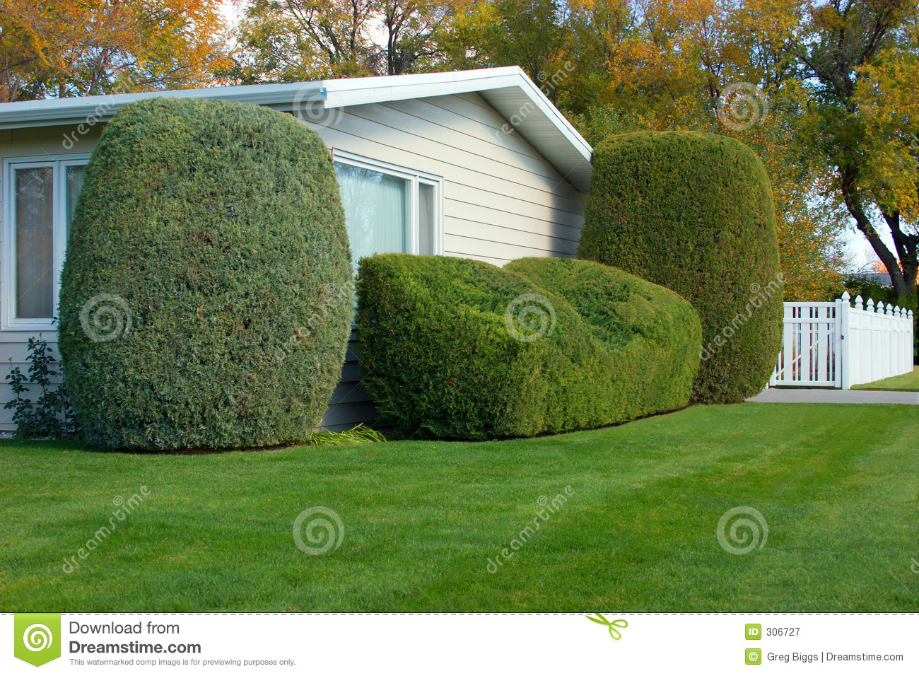 Neatly trimmed bush