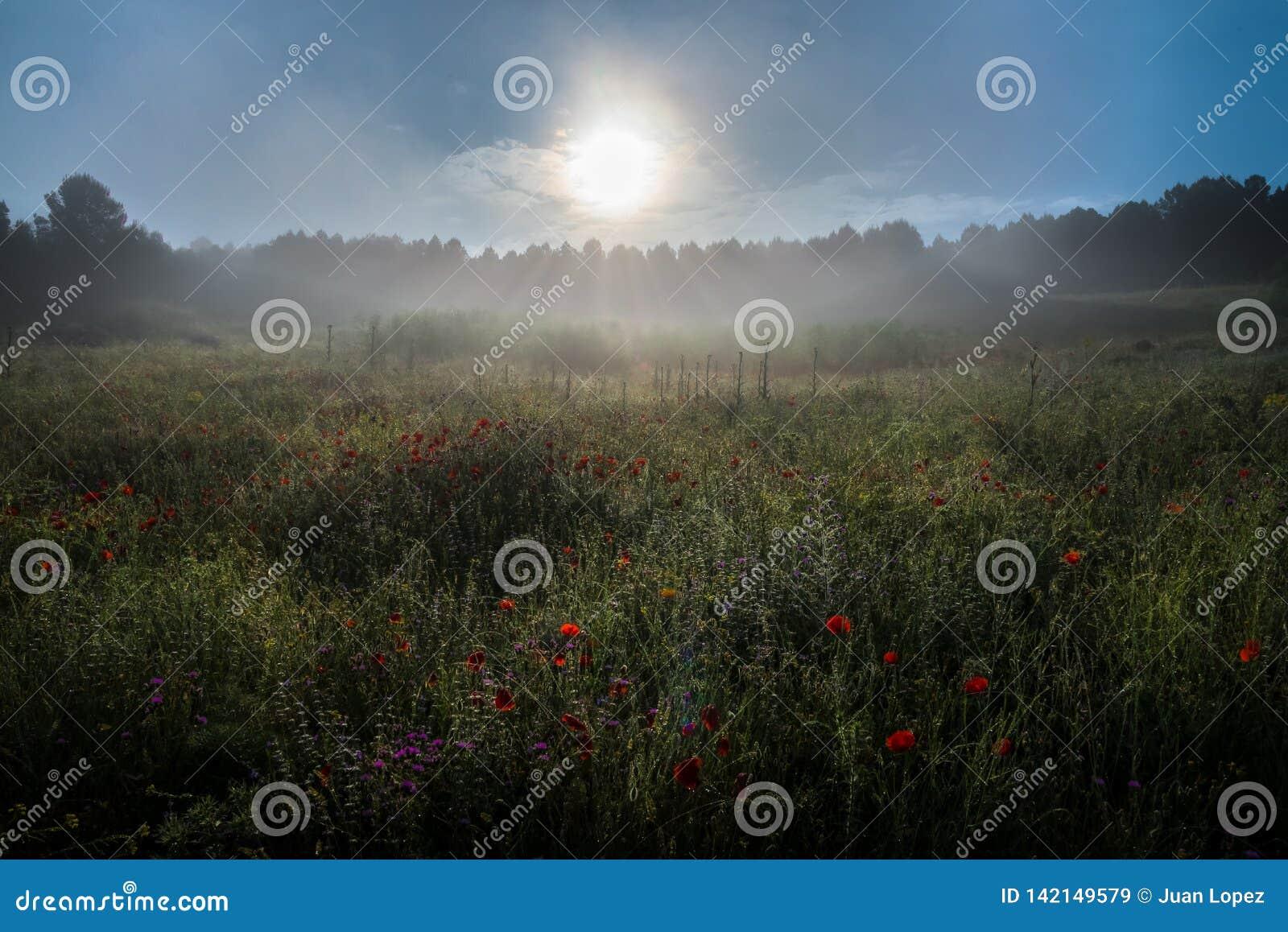 Nebbia ad alba