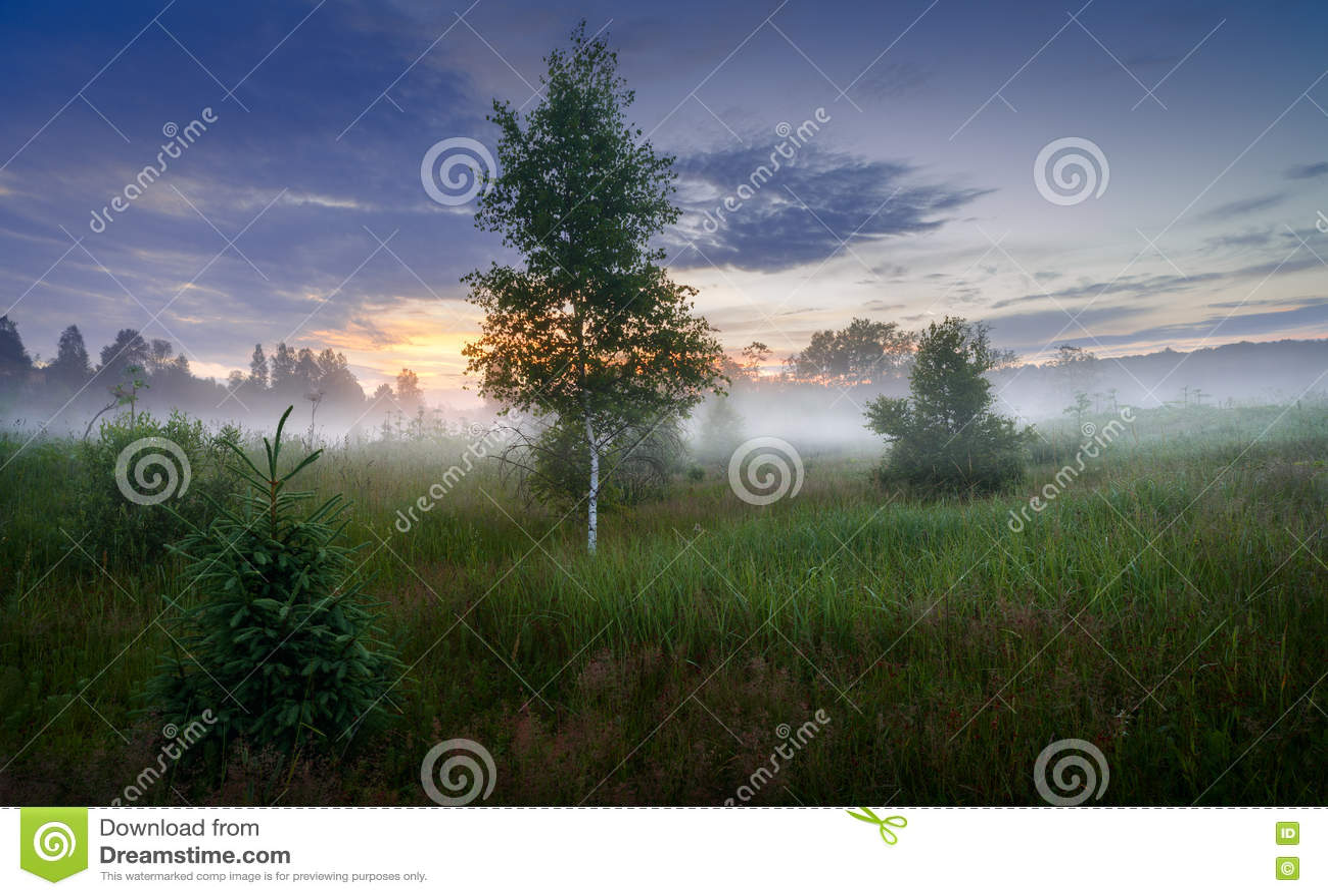 Nebbia spessa di mattina nella nebbia spessa di mattina della foresta di estate nella foresta allo stagno Paesaggio di mattina in