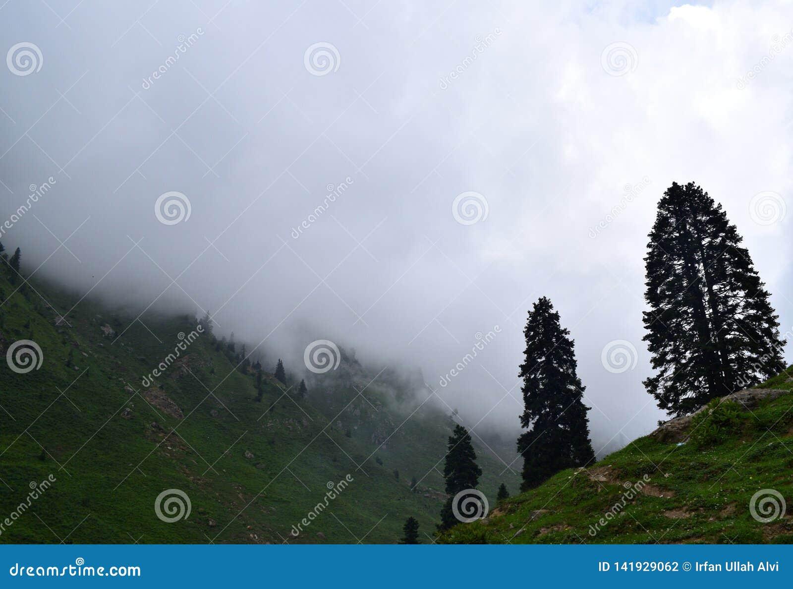Nebelhafte Landschaft mit Tannenwaldmorgennebel in den Bergen