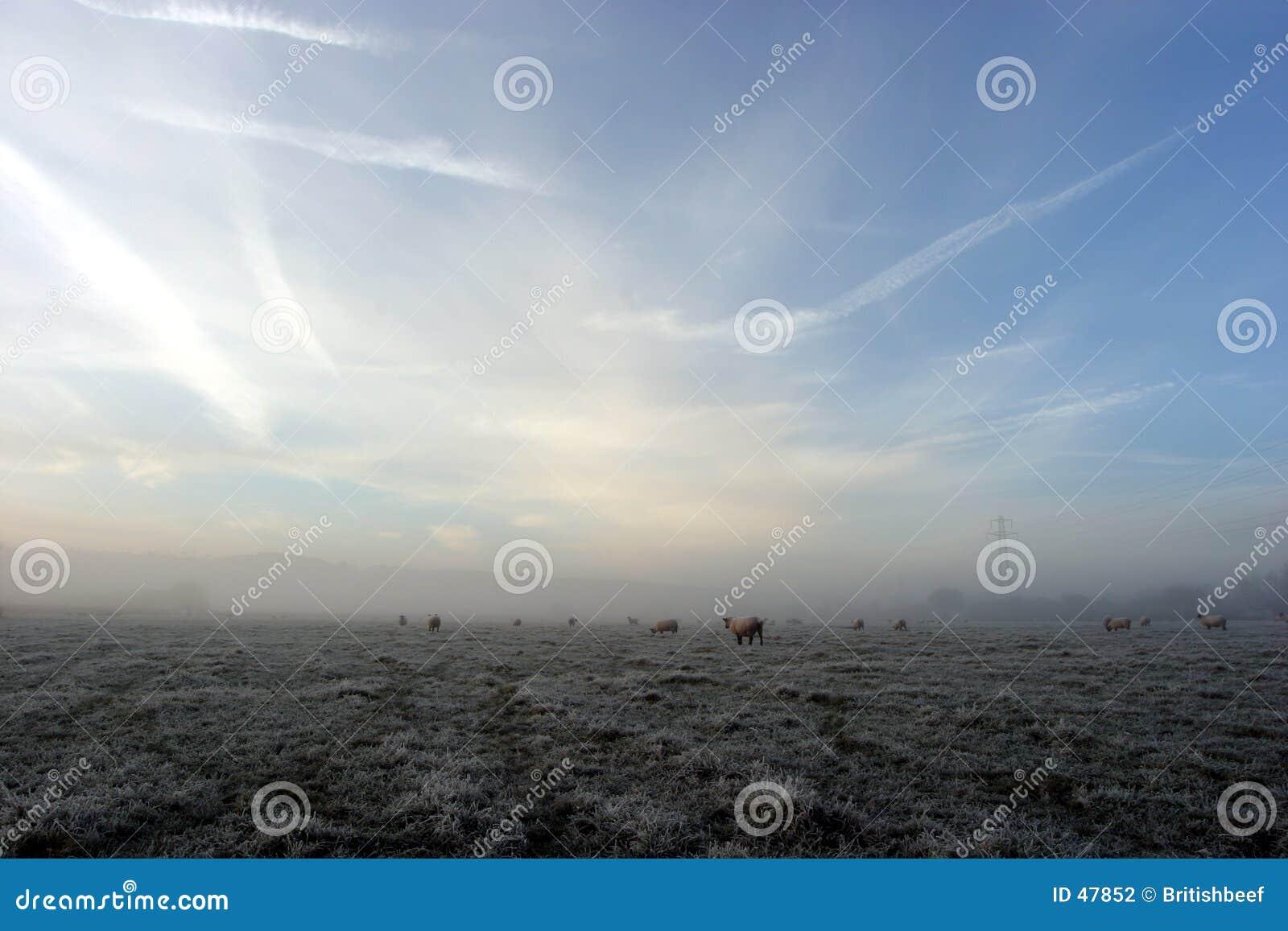 Nebelhafter Morgen