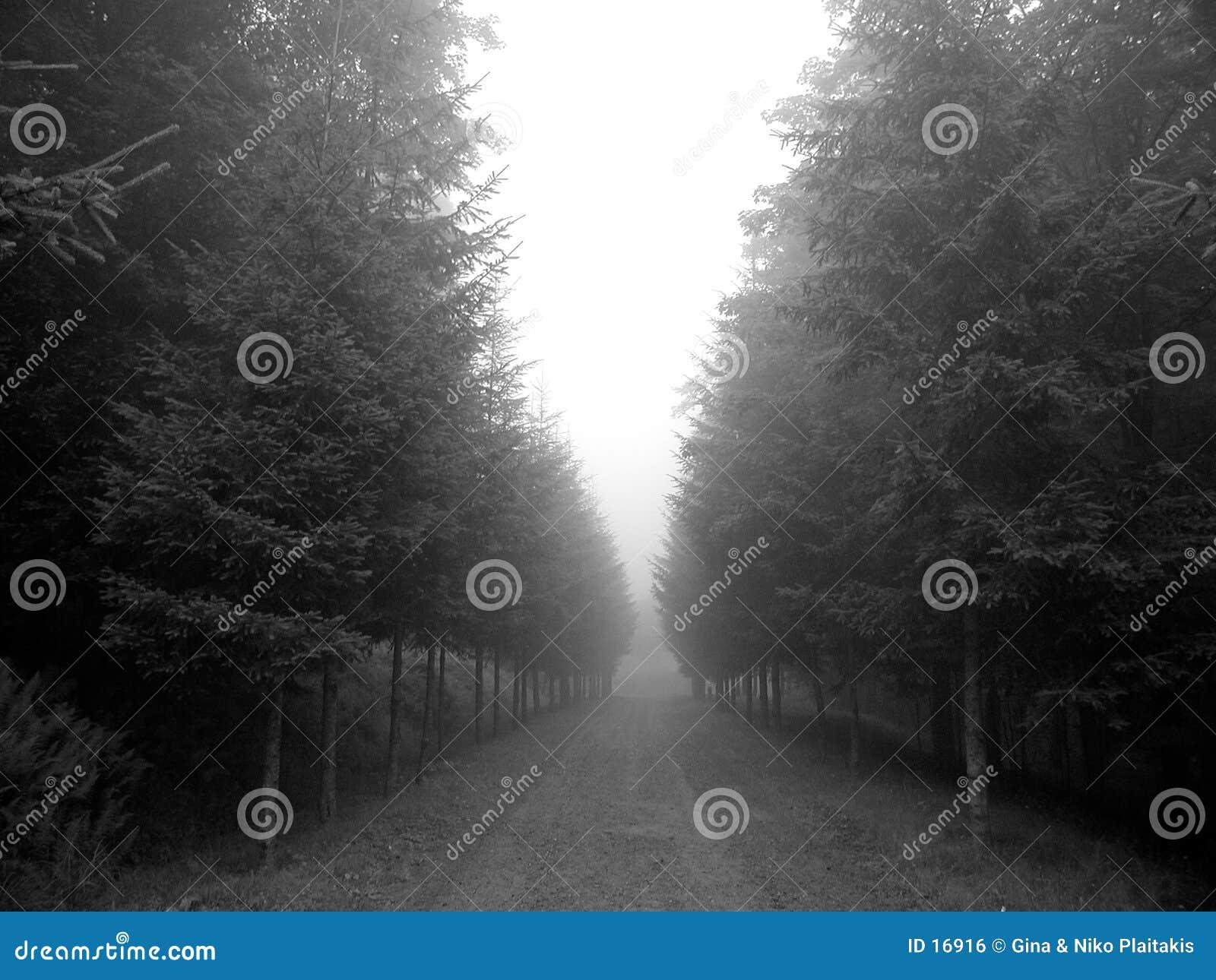 Nebelige Bäume
