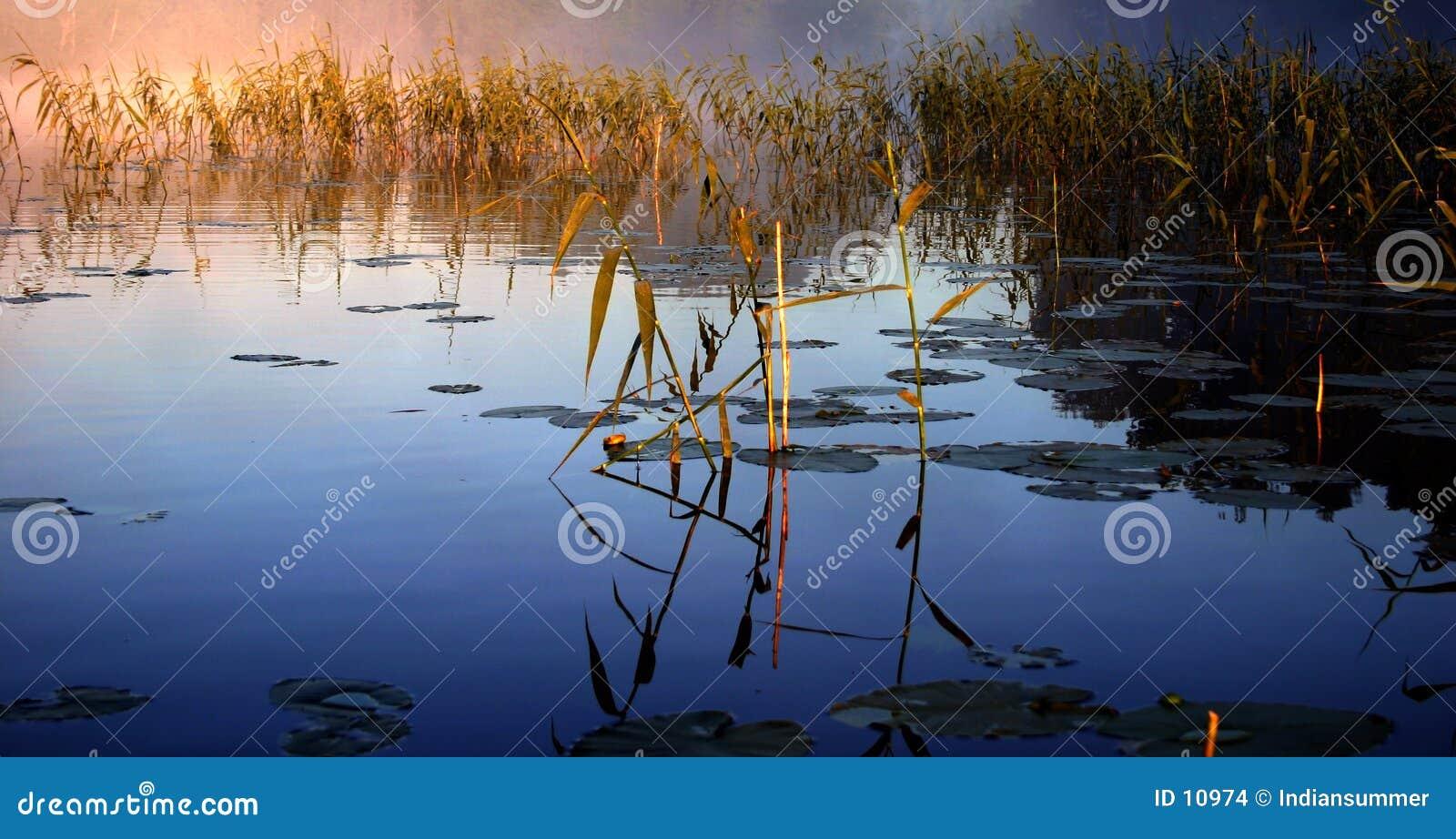 Nebeliger Morgen durch den See