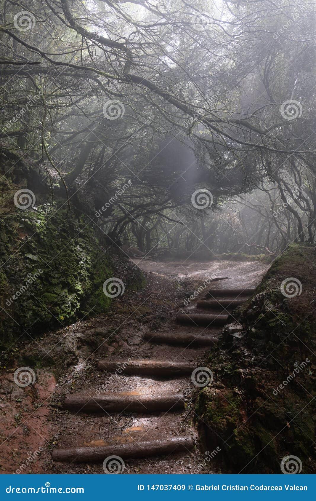 Nebeliger Weg im nass Wald