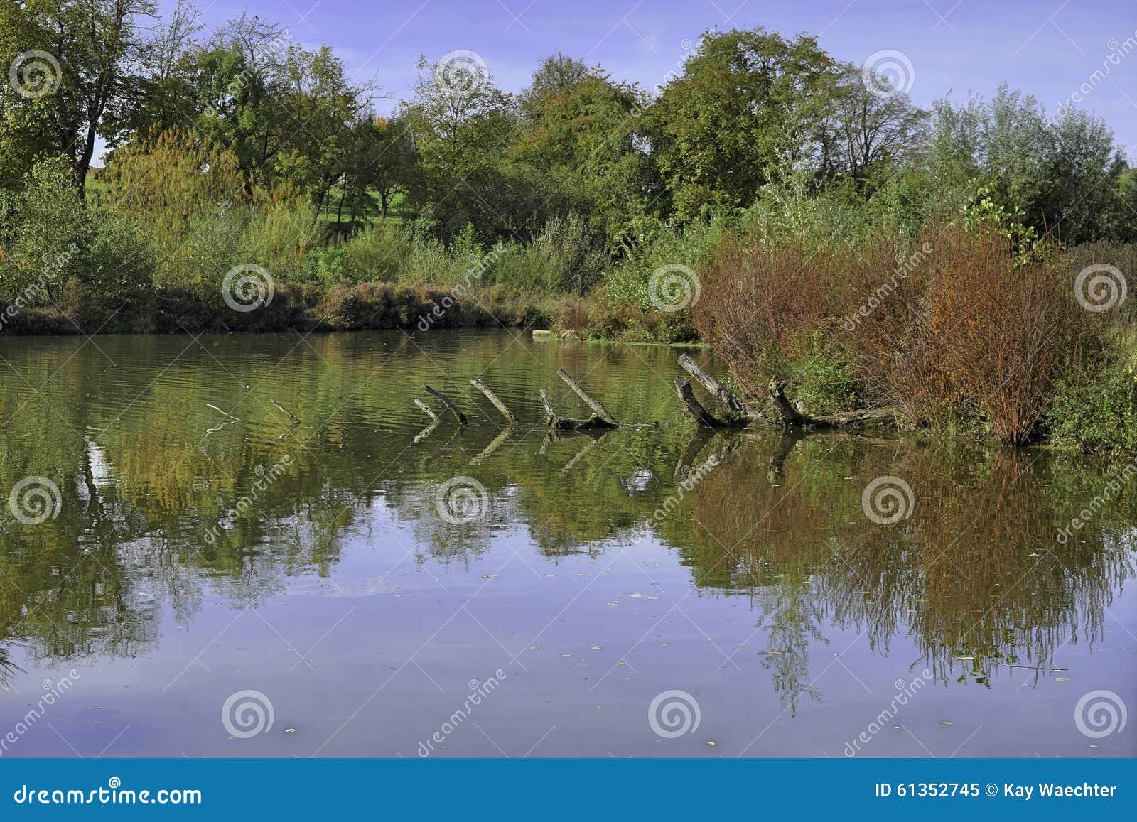 Neckar Wetlands Stock Photo - Image: 61352745