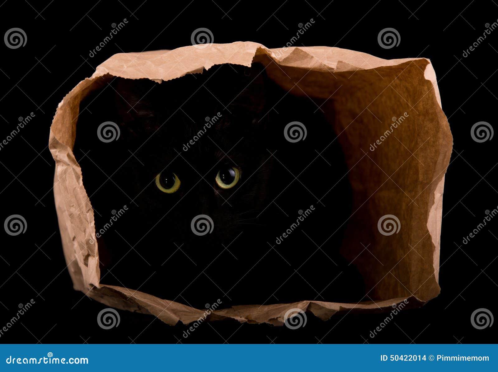 Nederlag för svart katt i skuggorna av en pappers- påse