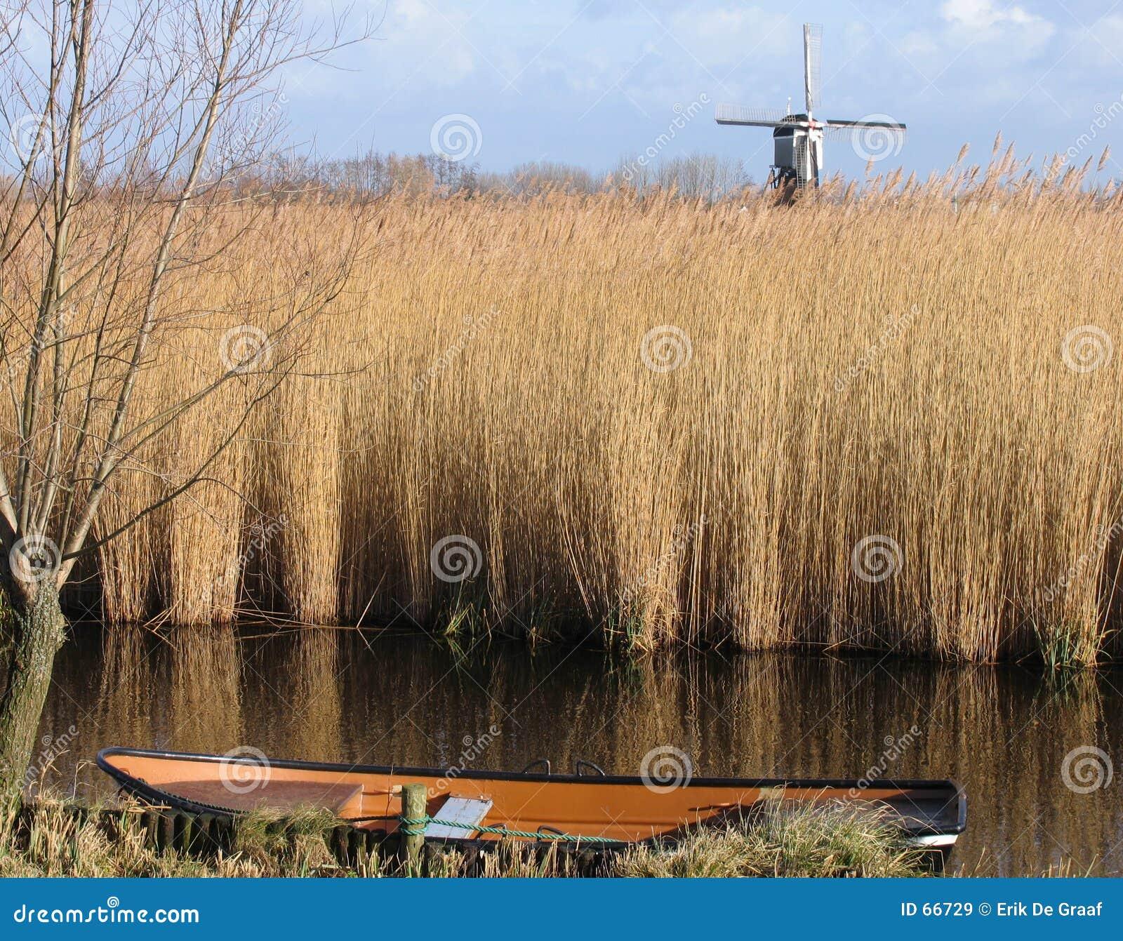 Nederlands rietlandschap 1
