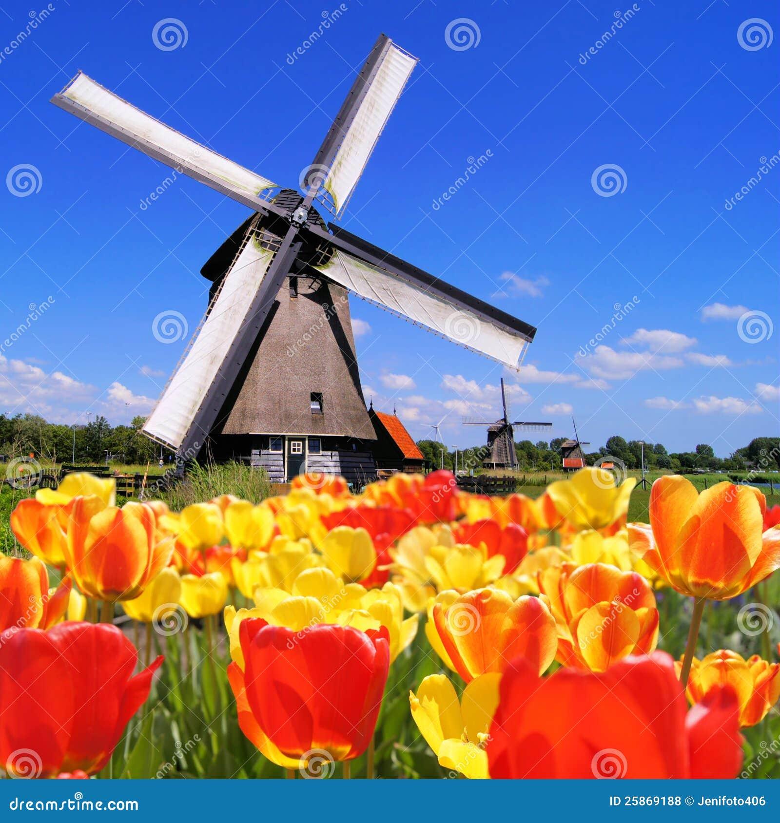 Nederlandse Tulpen En Windmolens Royalty vrije Stock Foto u0026#39;s   Afbeelding  25869188
