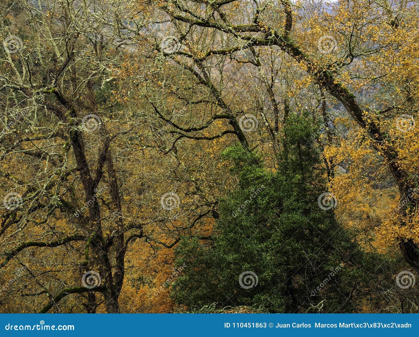 Nedgångfärg i träd