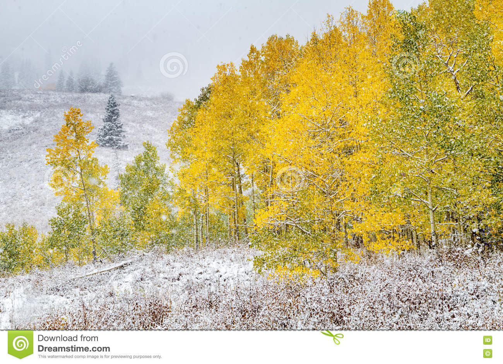 Nedgångfärg och insnöade Colorado
