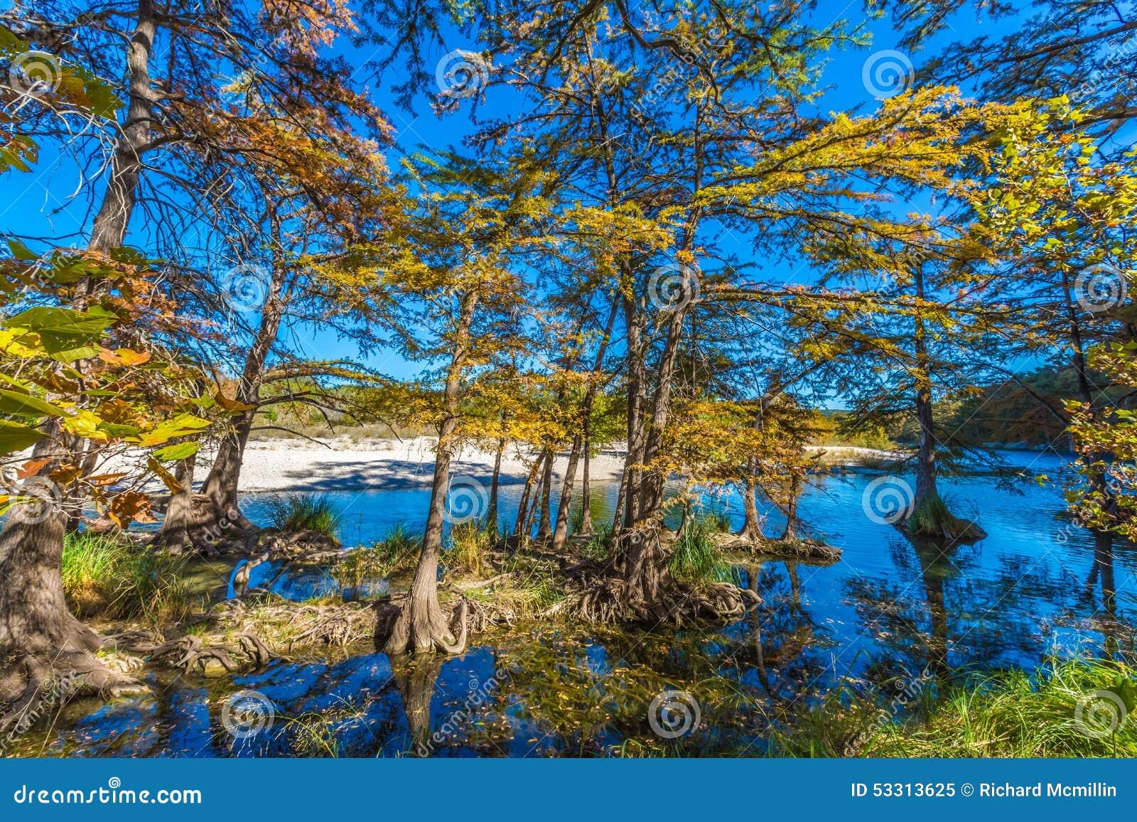 Nedgånglövverk på träden för skallig cypress i Crystal Clear Frio River