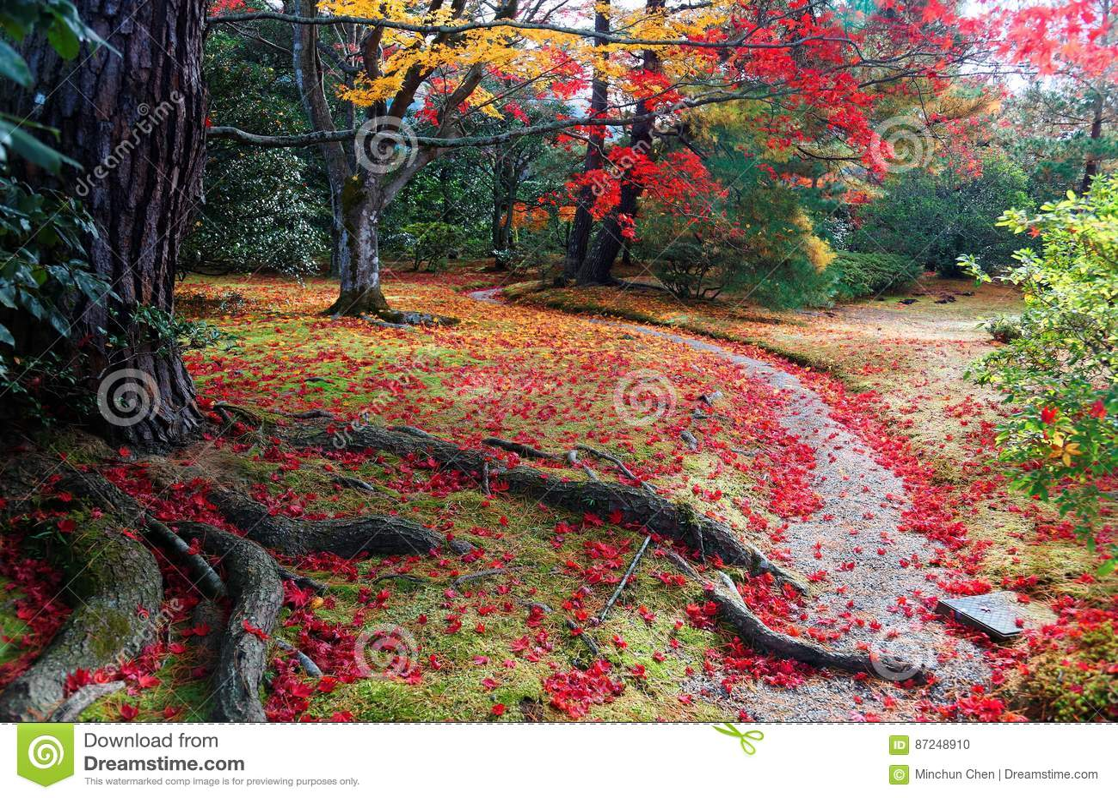 Nedgånglandskap av färgrik lövverk av träd för japansk lönn och stupade sidor på en slinga i trädgården av Shugakuin den imperial