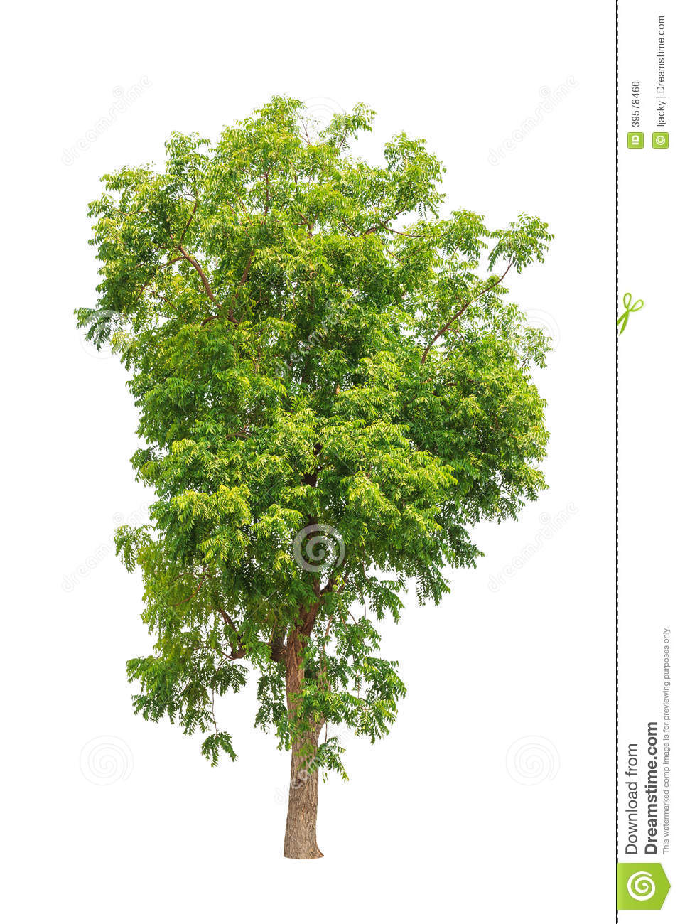 2 901 Neem Tree Photos Free Royalty Free Stock Photos From Dreamstime Even if it is not real, but artificial or even virtual. dreamstime com